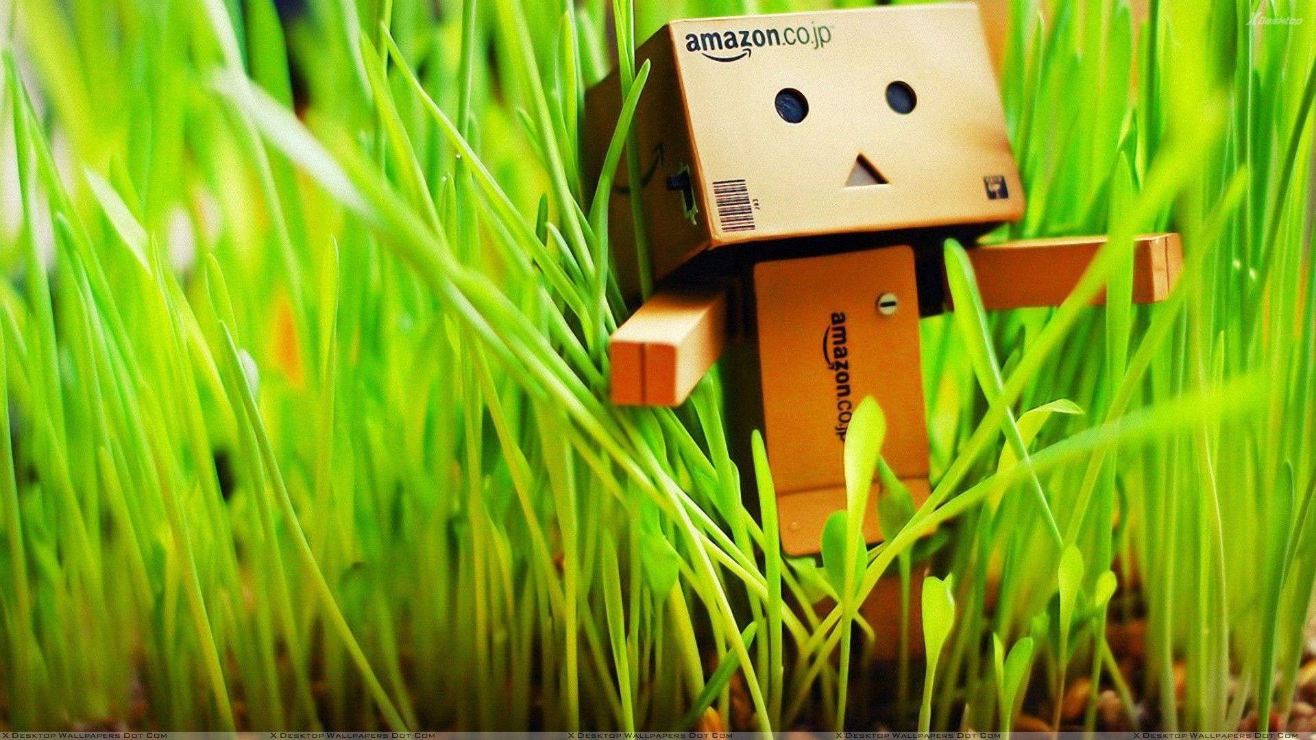 amazon 3d wallpaper