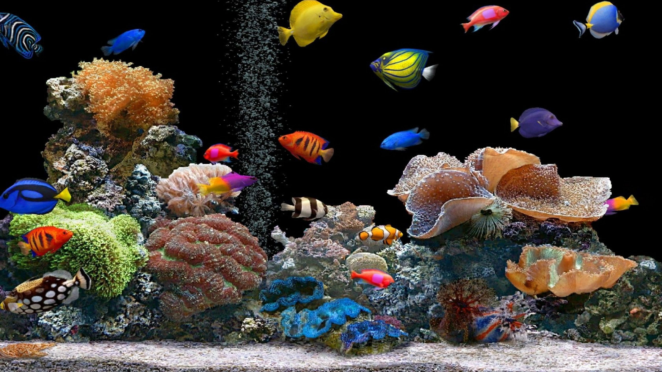 fish tank background printable