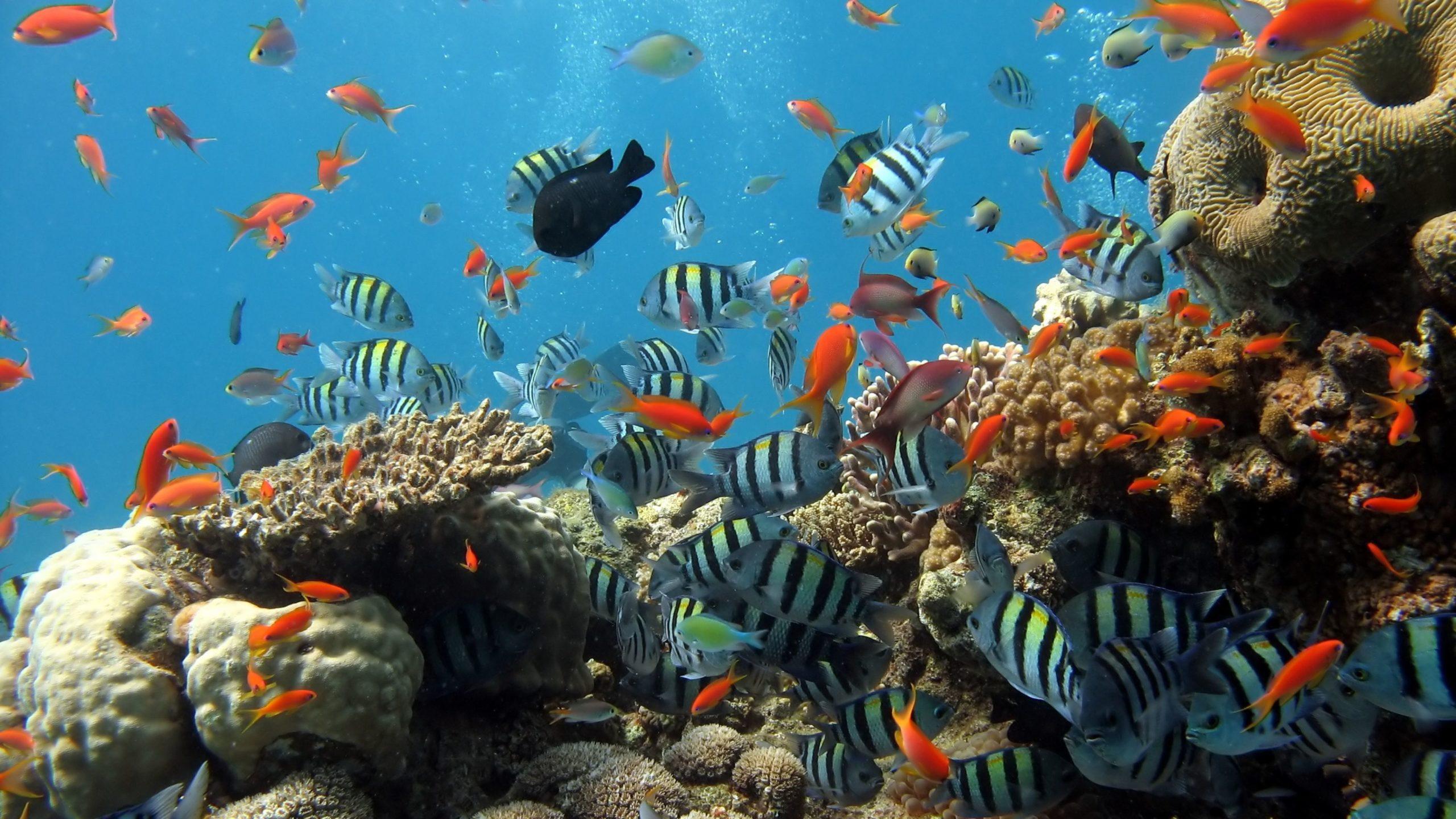 aquatic backgrounds