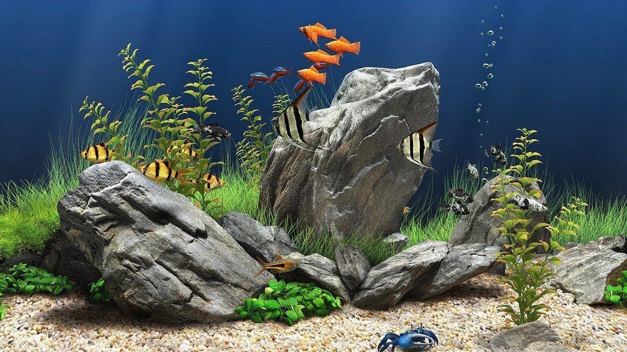 aquatic background