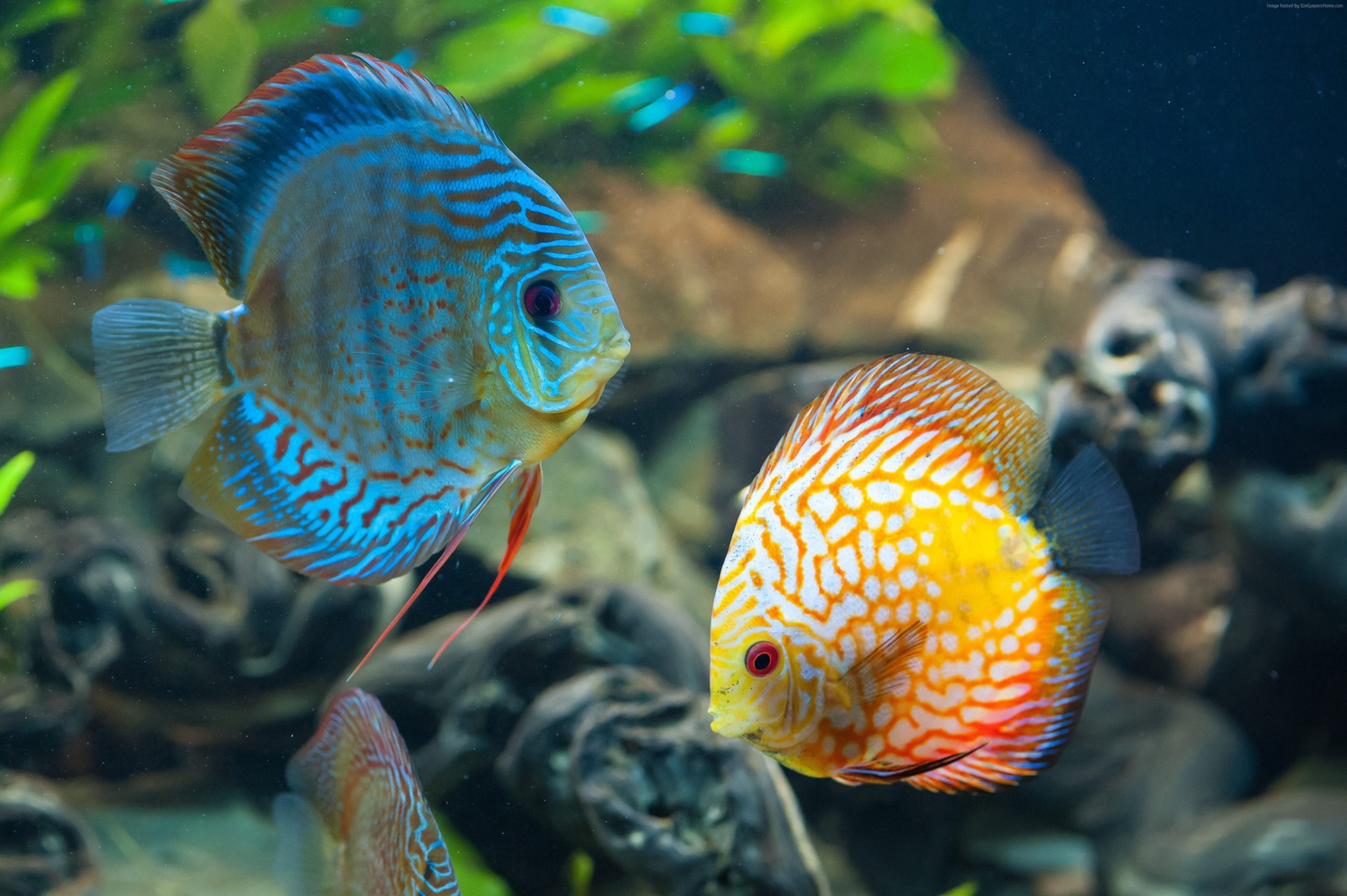 fish tank background wallpapers