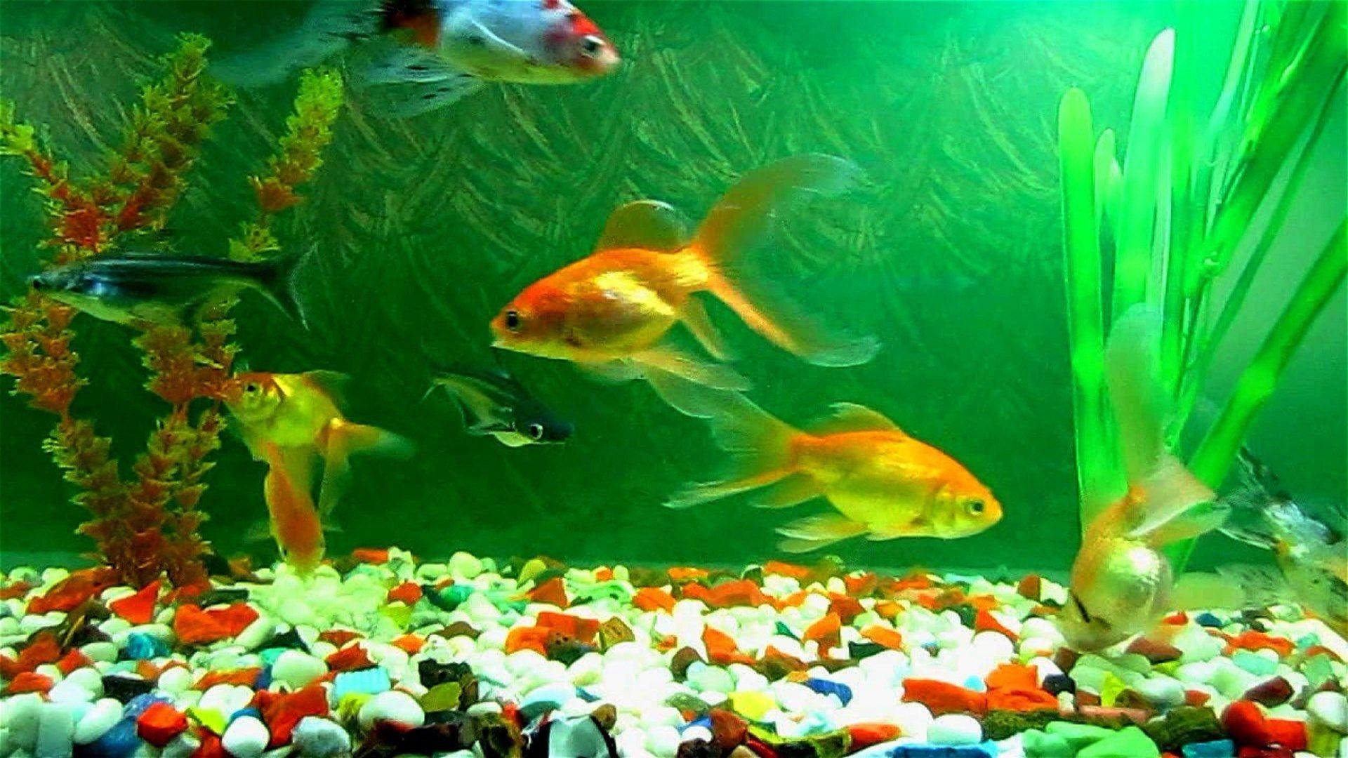 wall paper aquarium