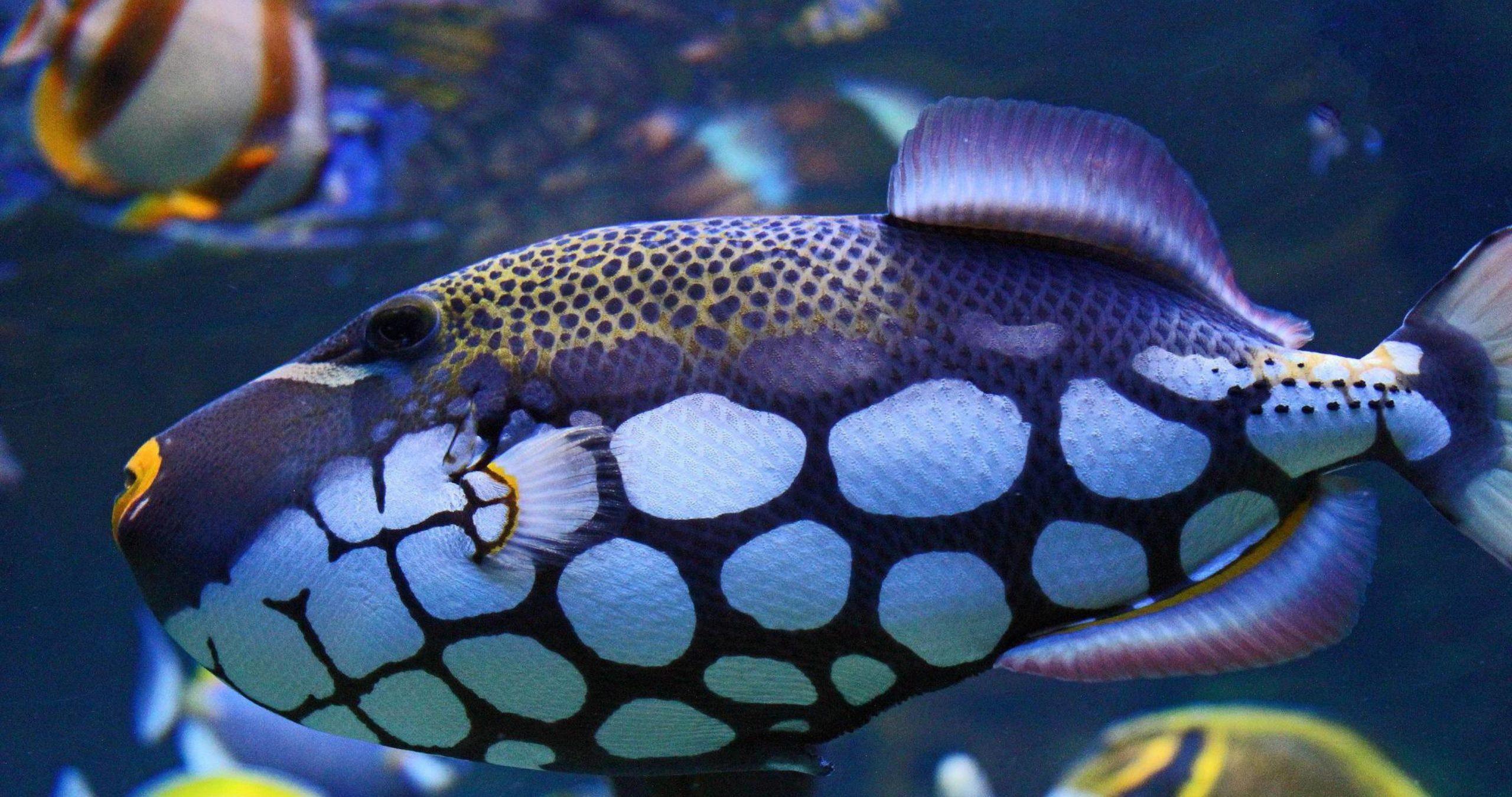 aquarium desktop wallpapers