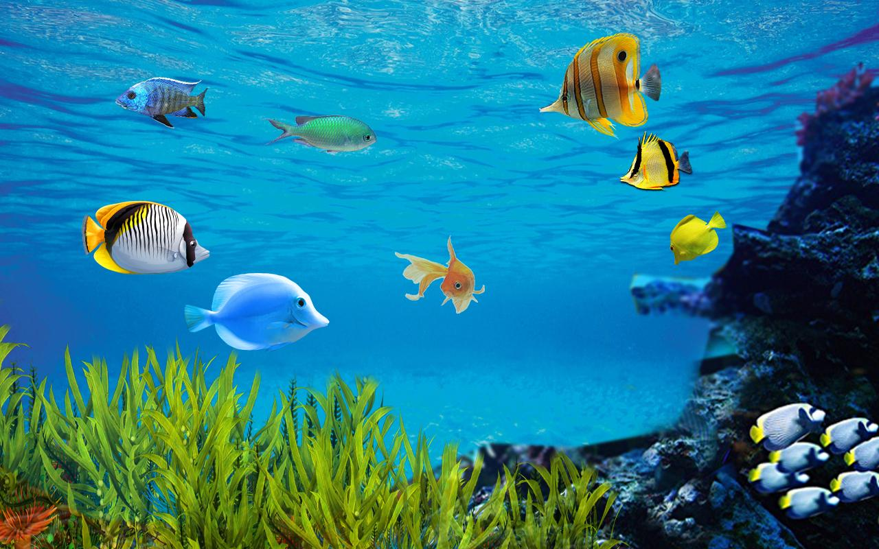 fish background images