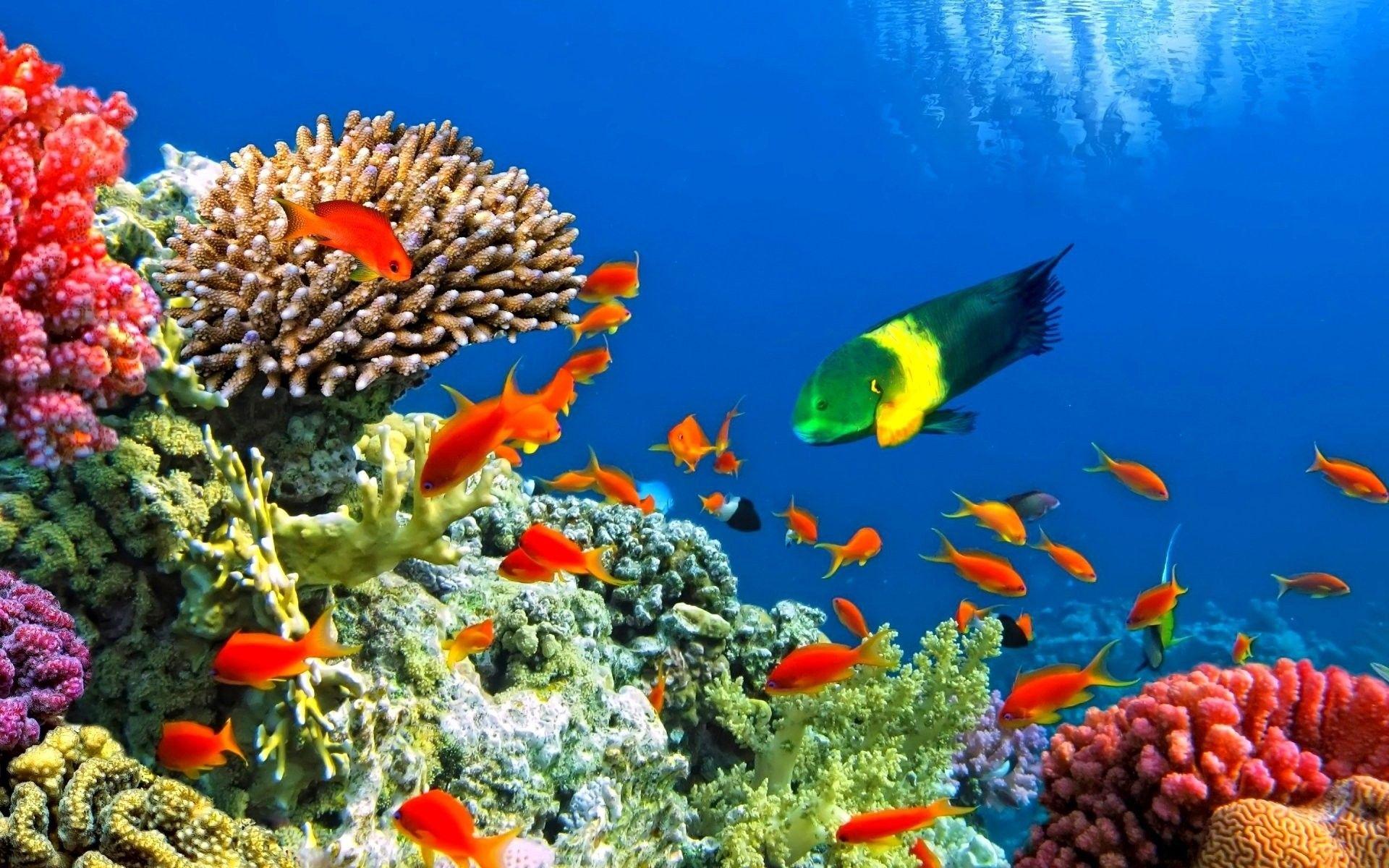 aquarium wallpaper free download