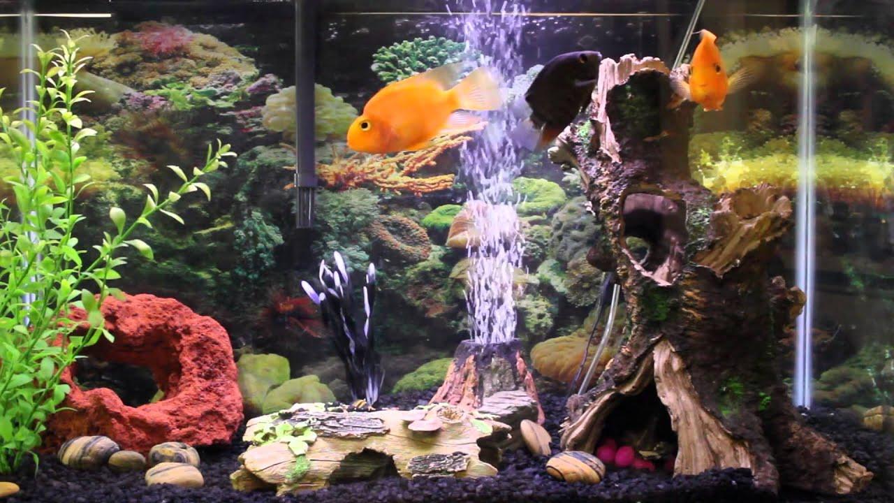 hd aquarium wallpaper