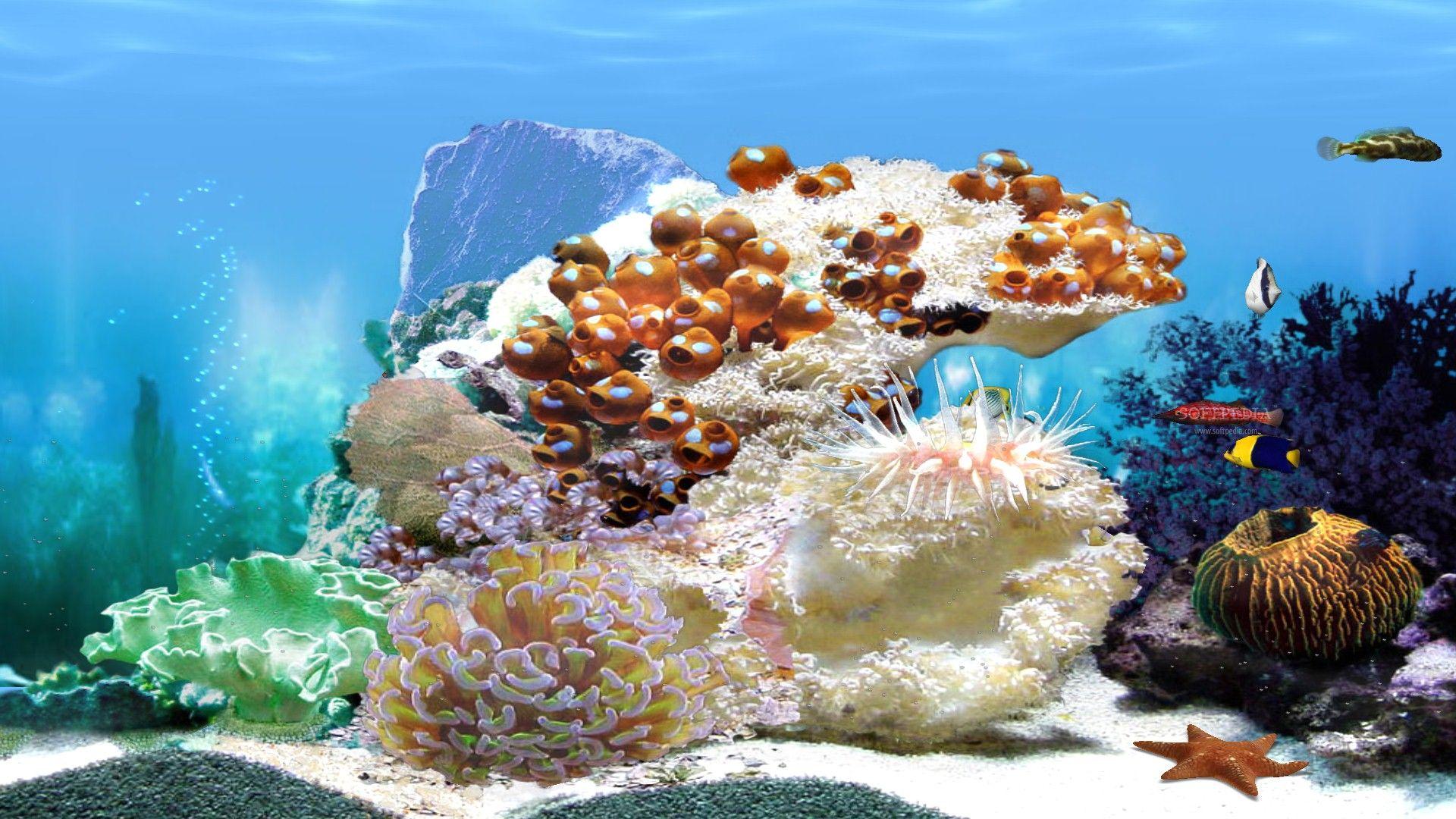 aquarium picture backgrounds