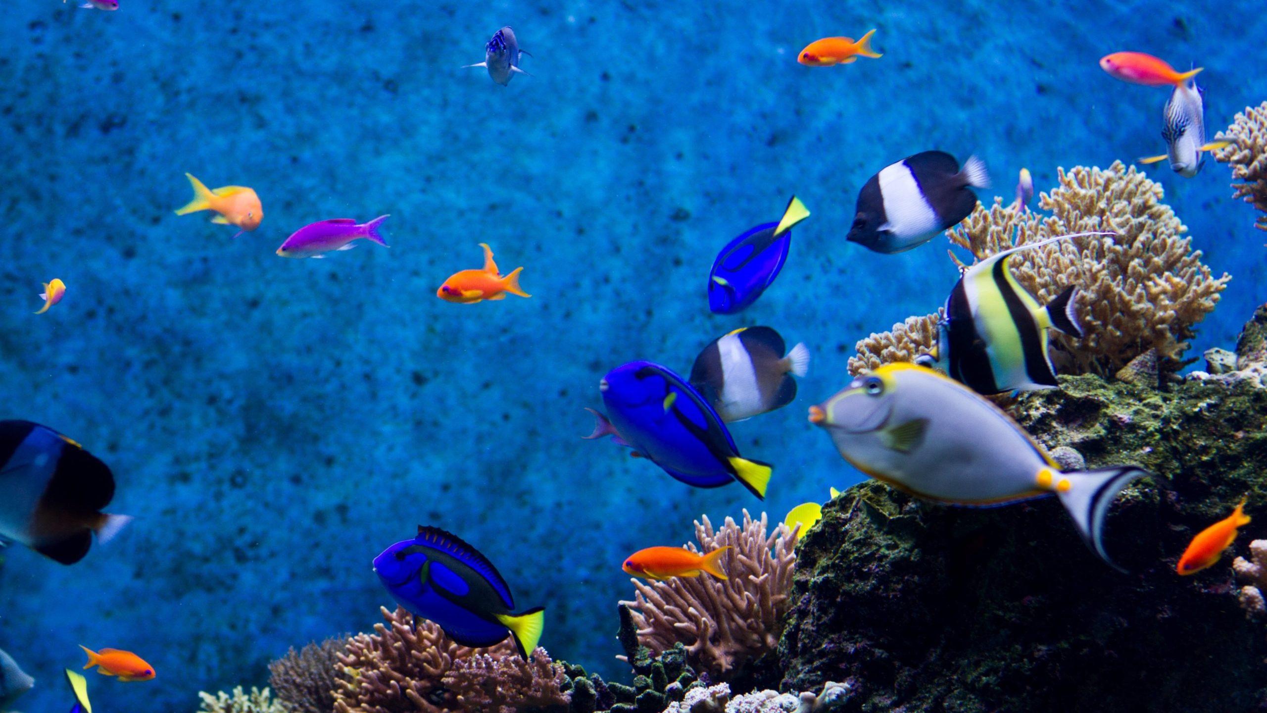 aquarium iphone wallpaper