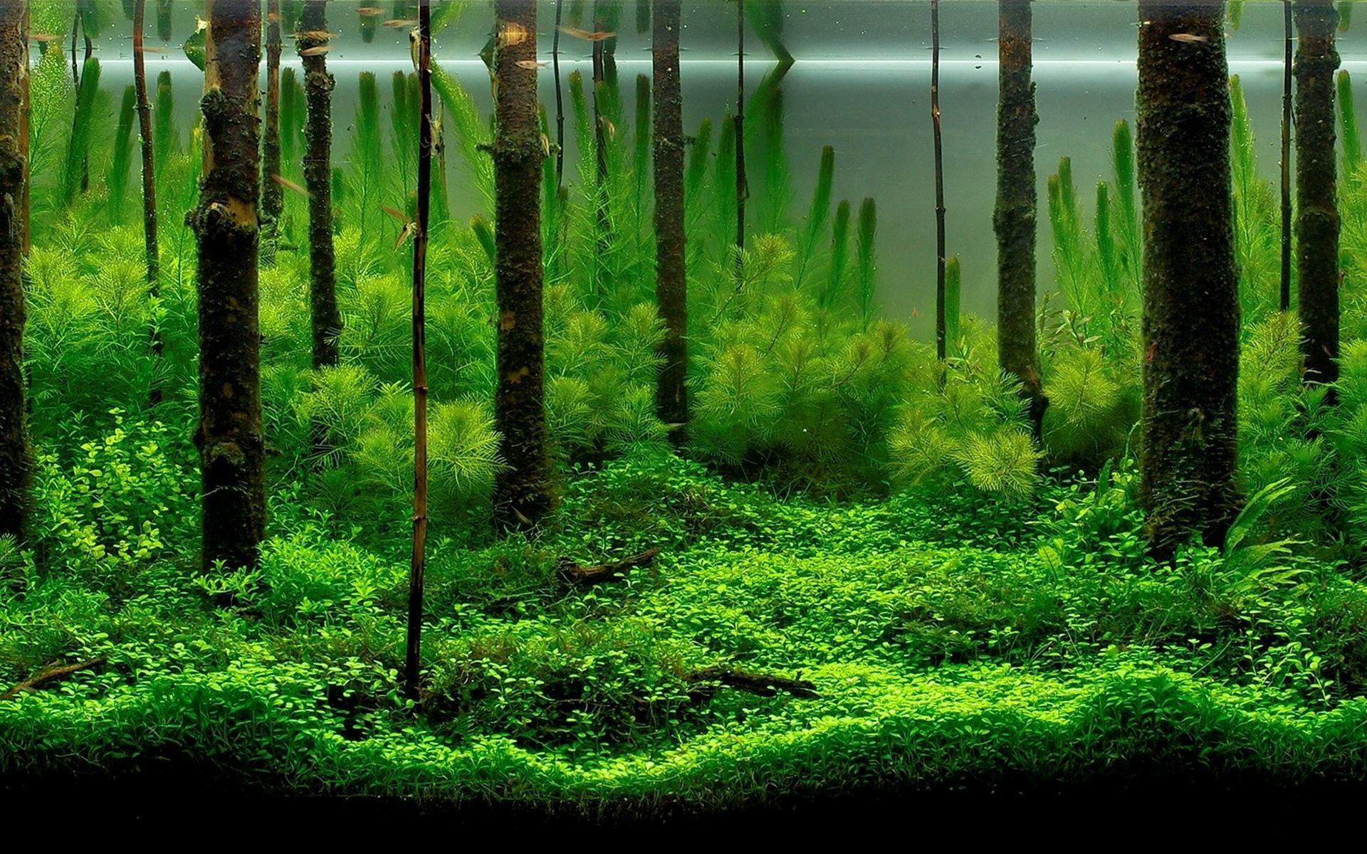 freshwater aquarium wallpaper