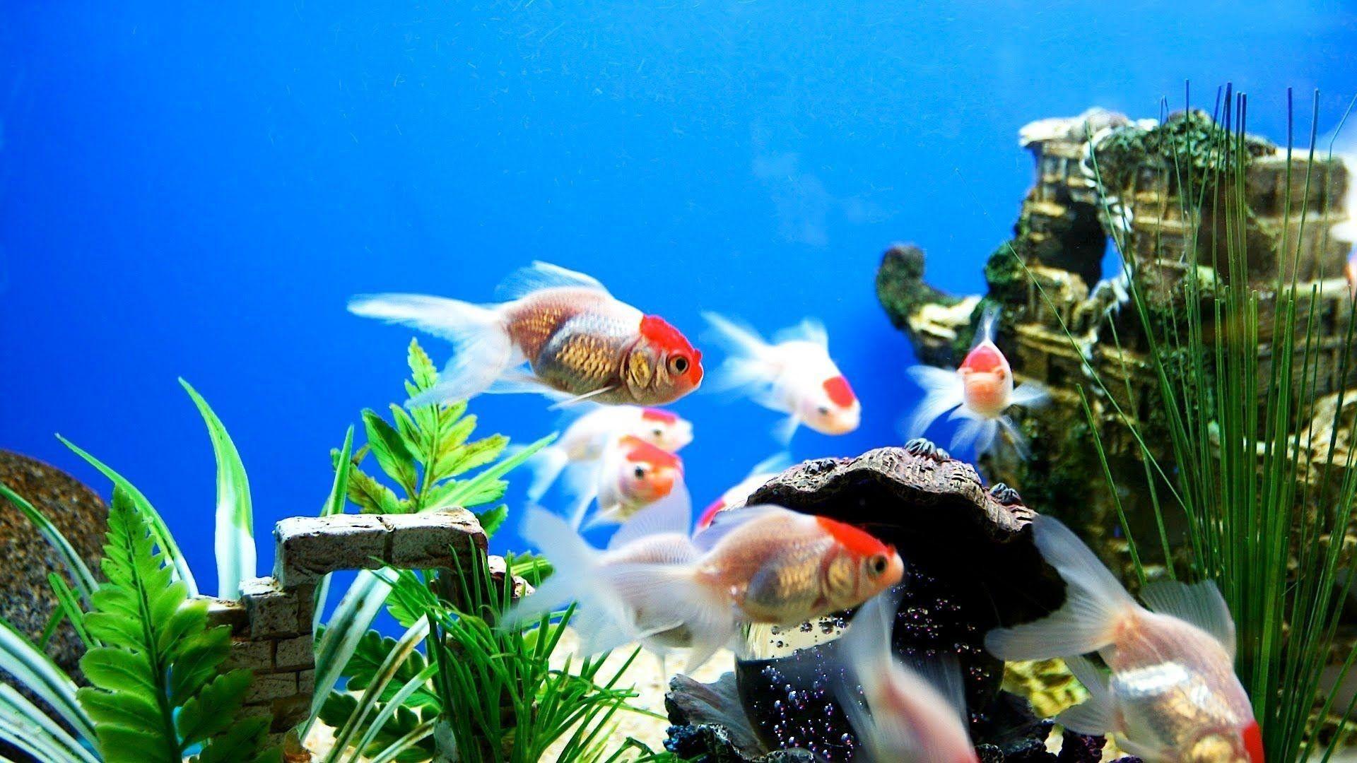 aquarium wall paper