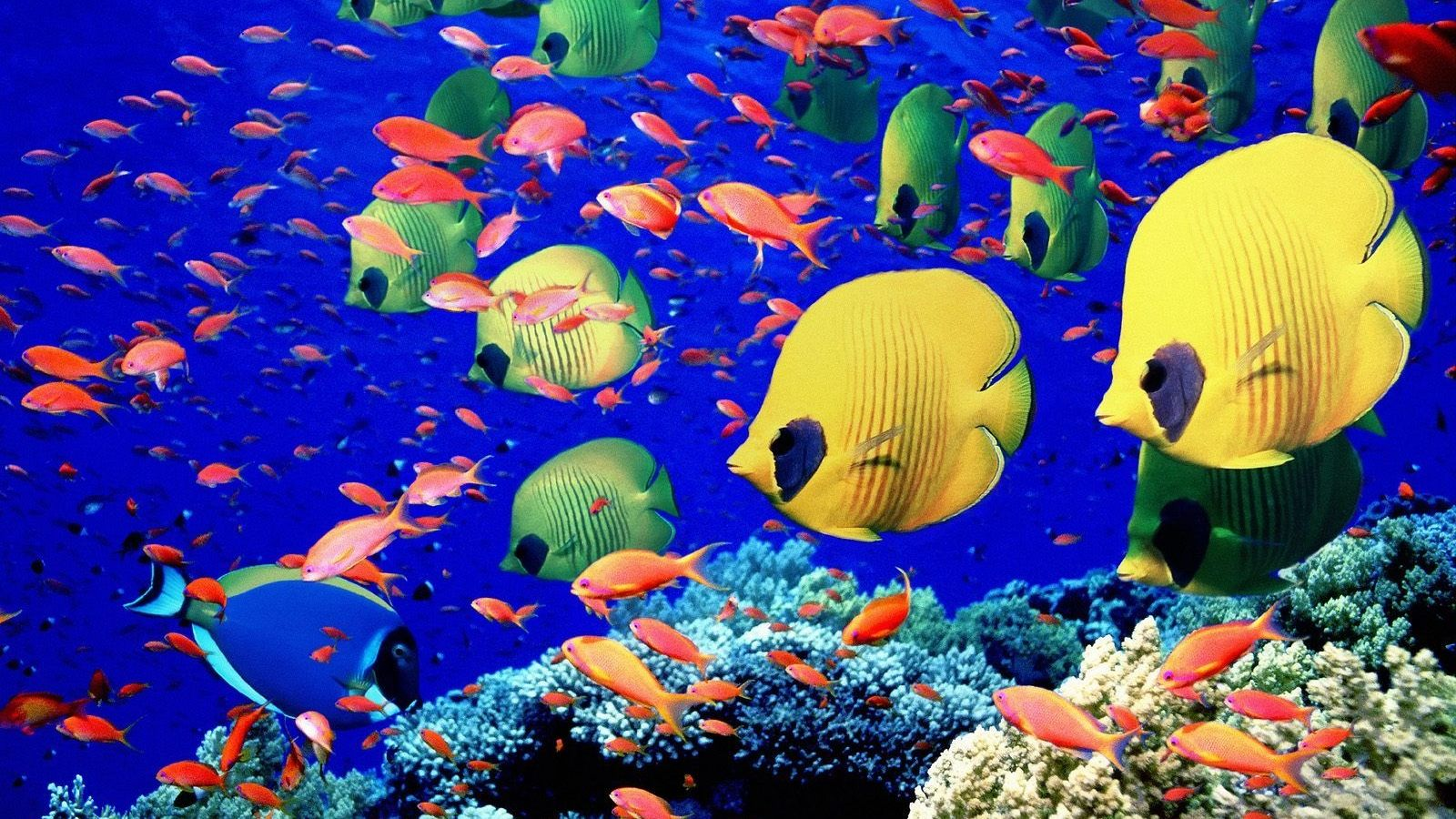 fish tank backgrounds printable freeware