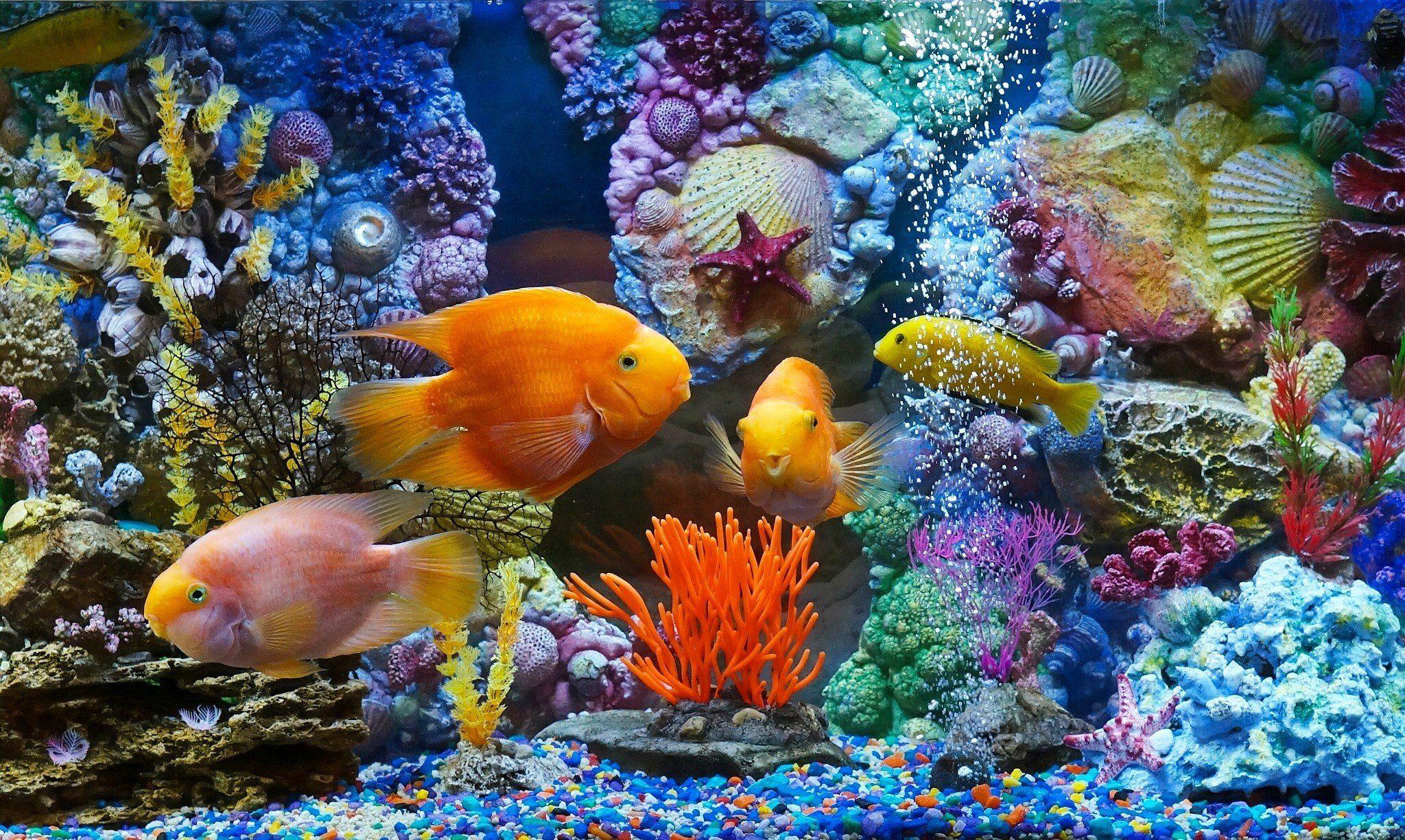 aquarium background print