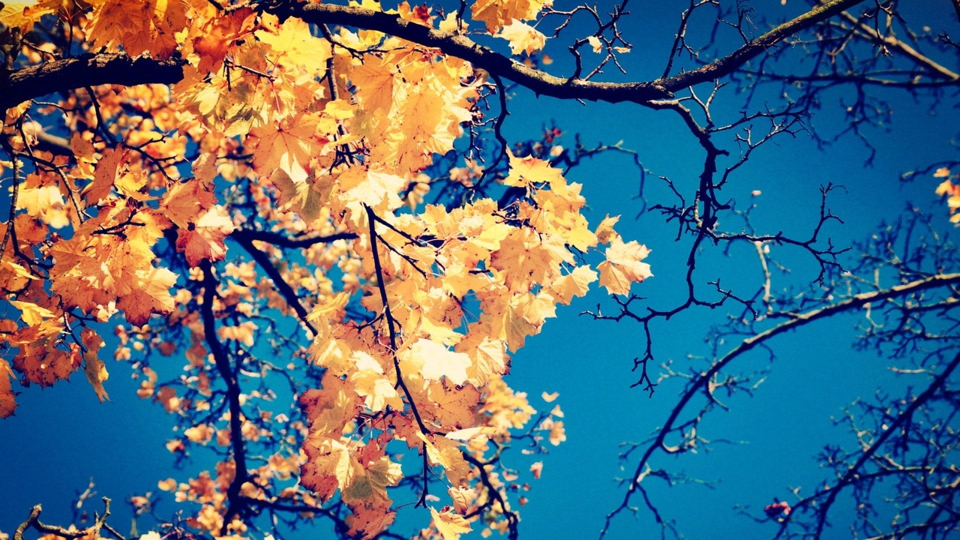 fall themed wallpaper