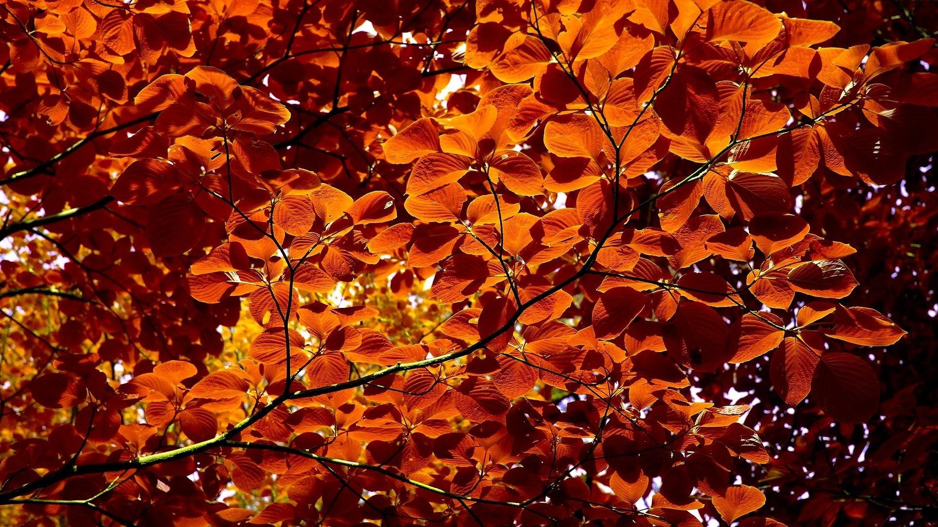 cute autumn backgrounds
