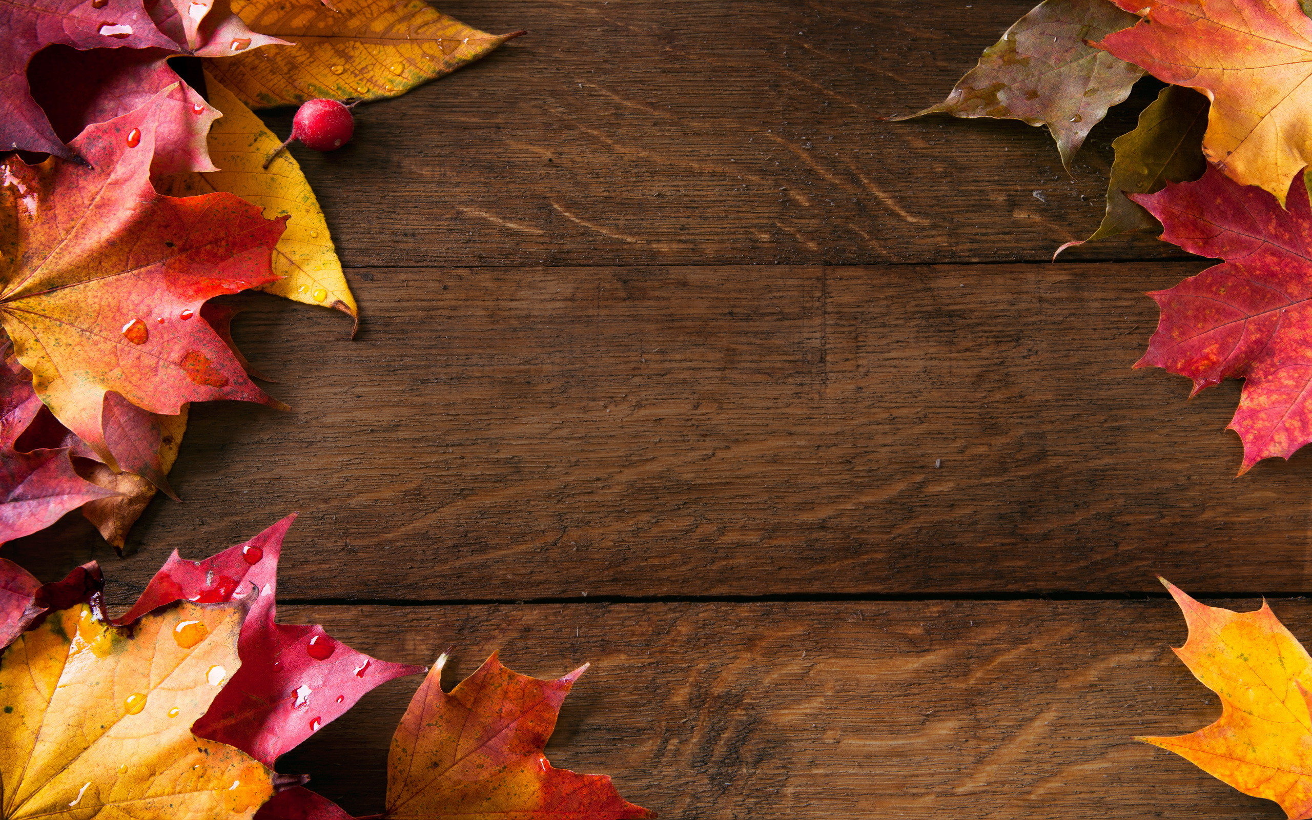 fall pattern wallpaper