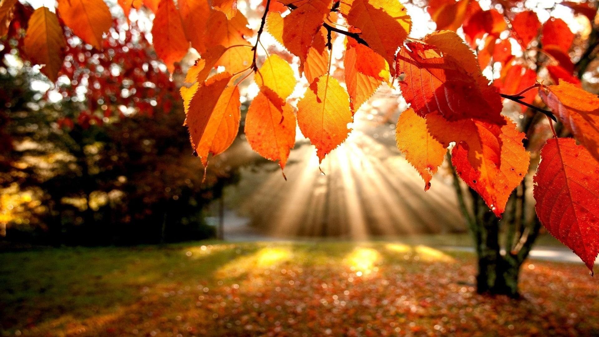 autumn backgrounds wallpaper