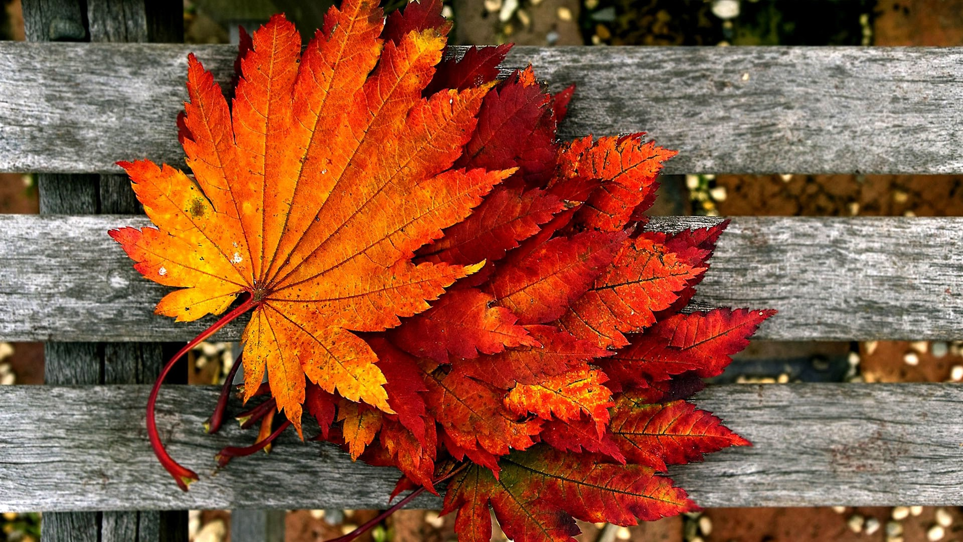 autumn background hd
