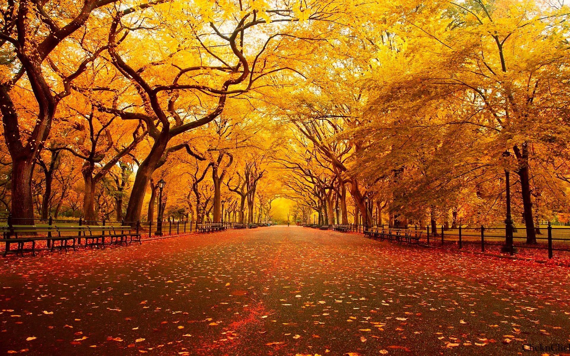 autumn images wallpaper