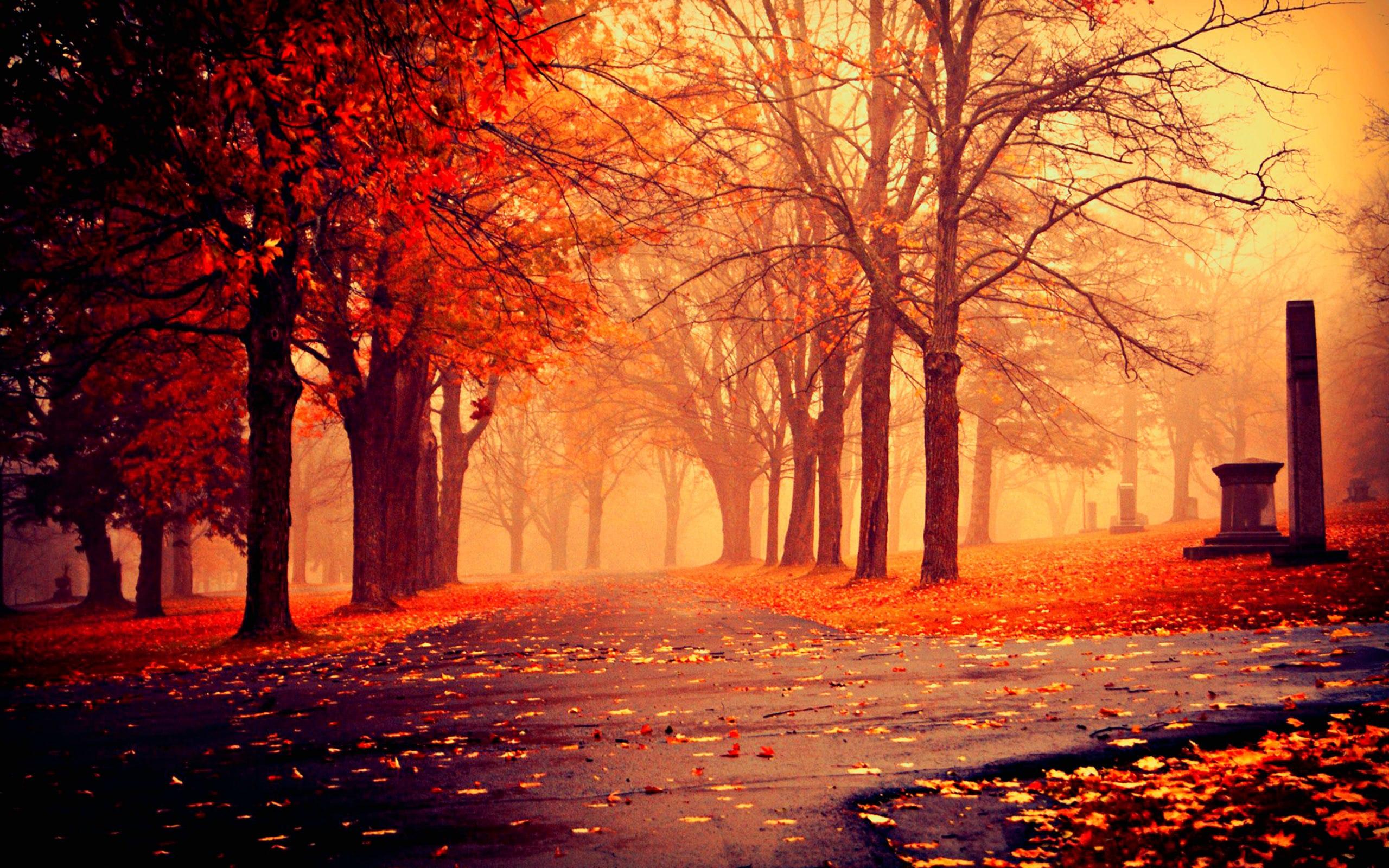 autumn screen wallpaper