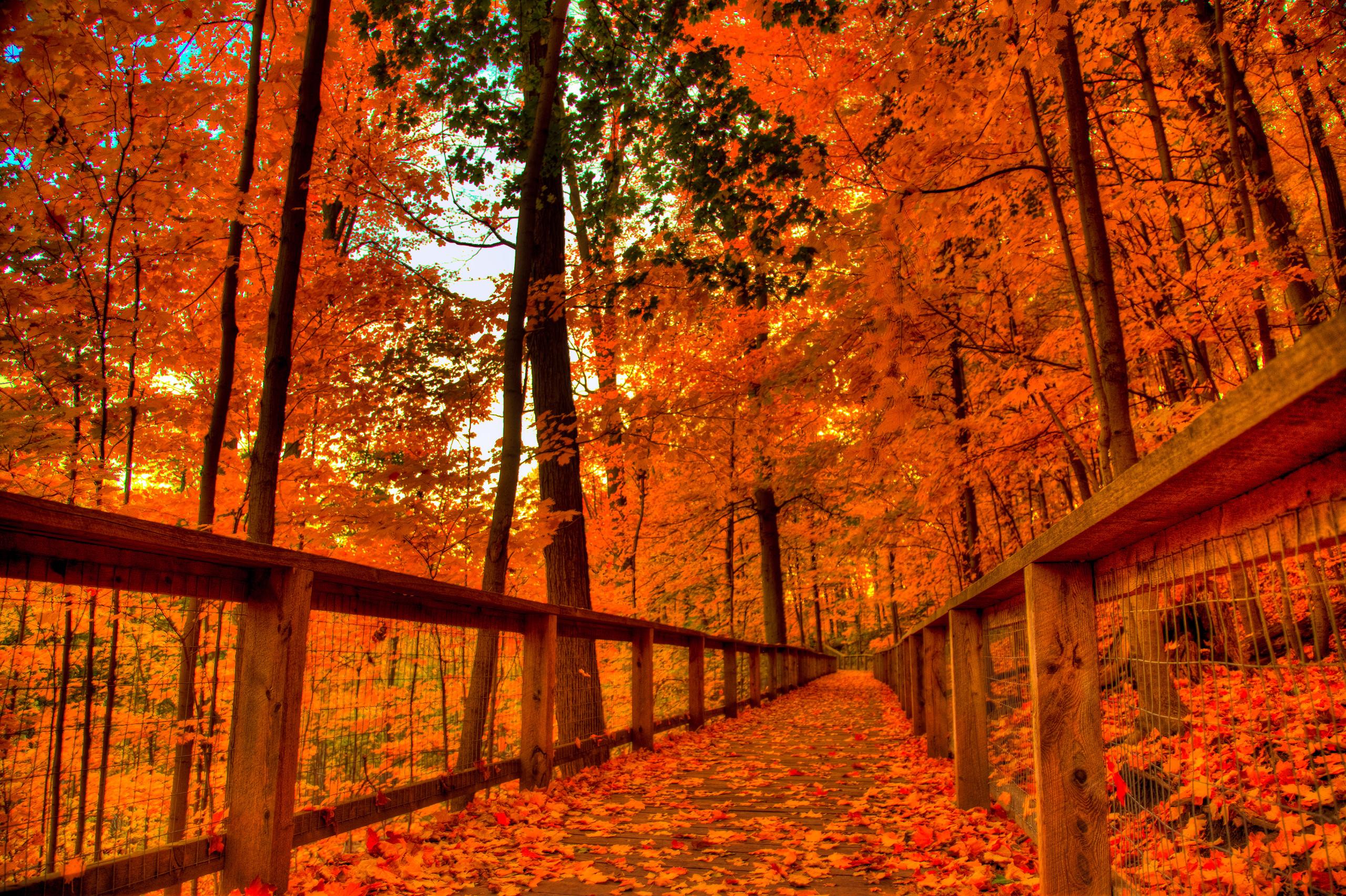 fall themed desktop backgrounds