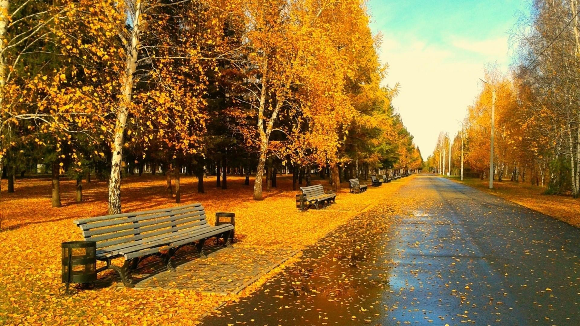autumn theme wallpaper