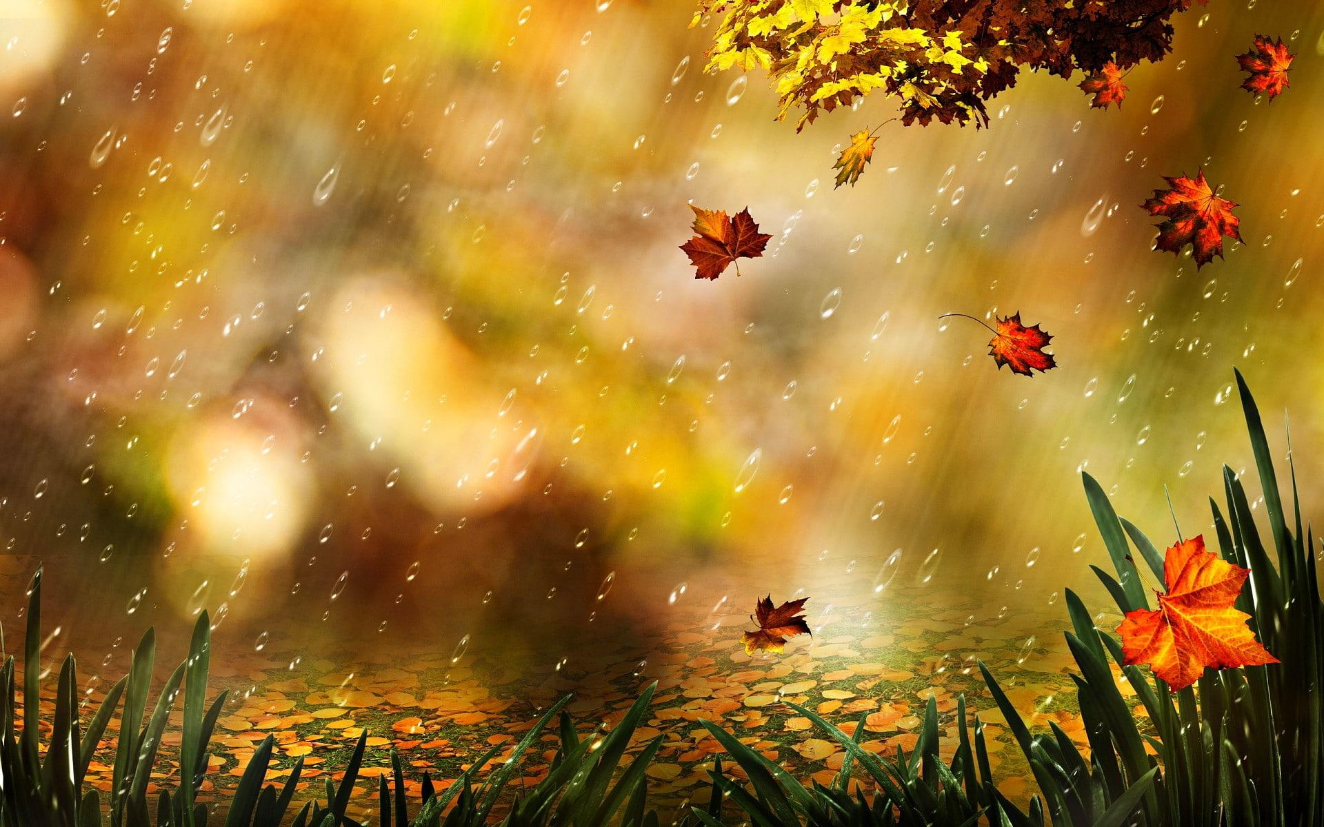 aesthetic fall wallpaper