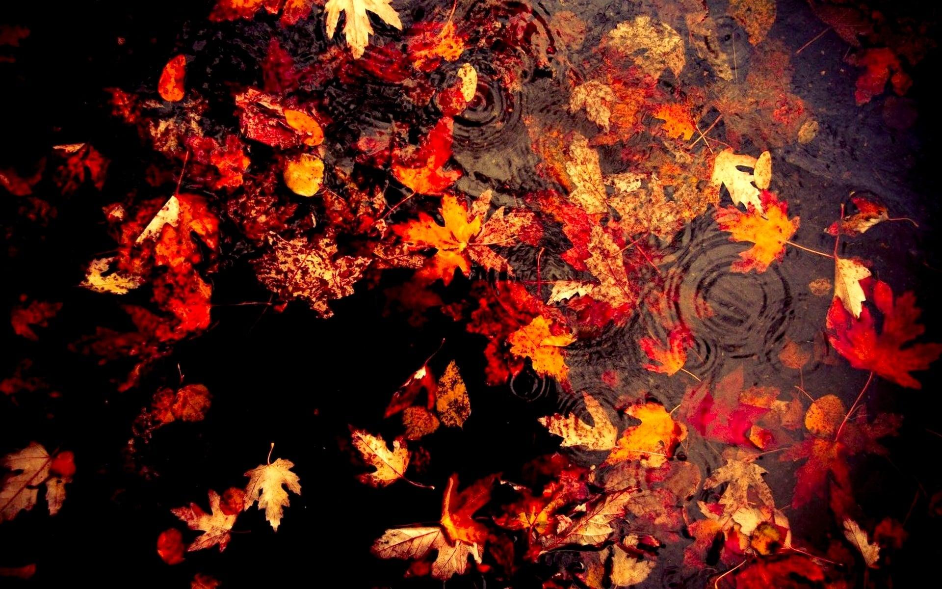 beautiful autumn wallpaper