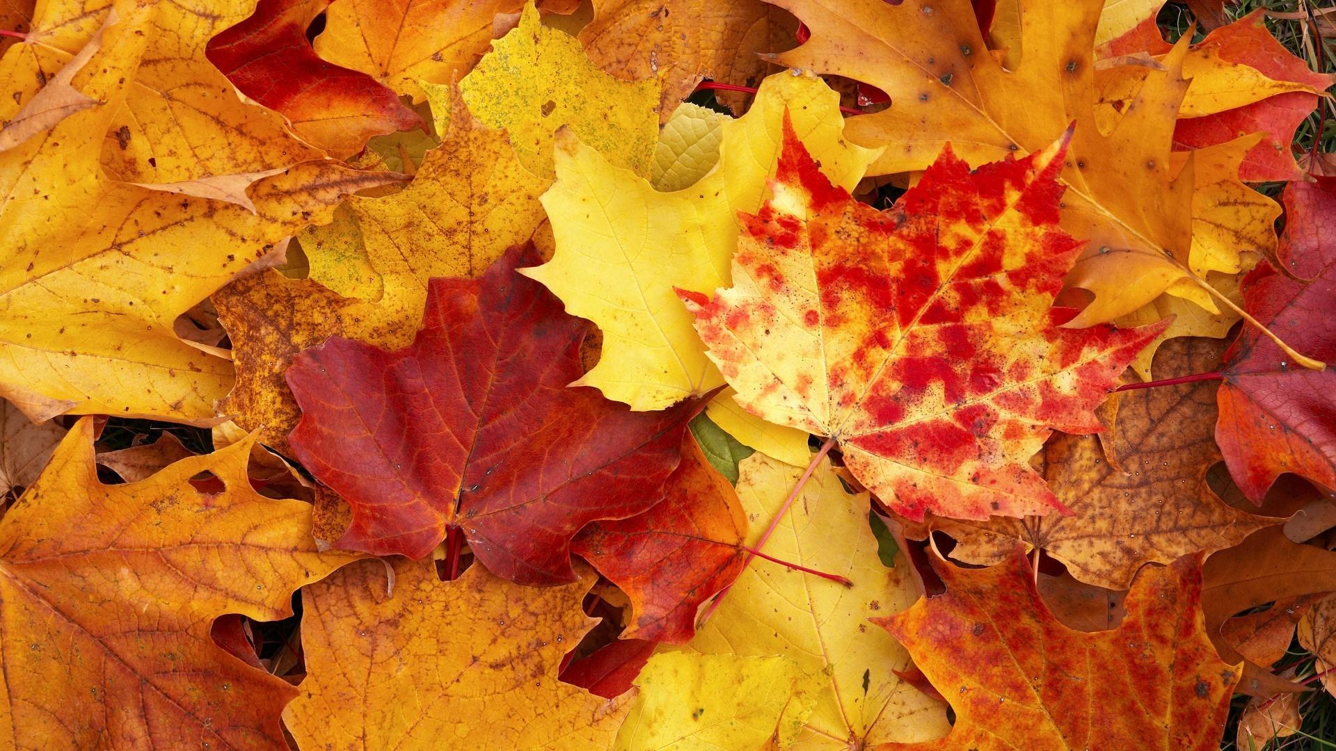 desktop background autumn wallpaper