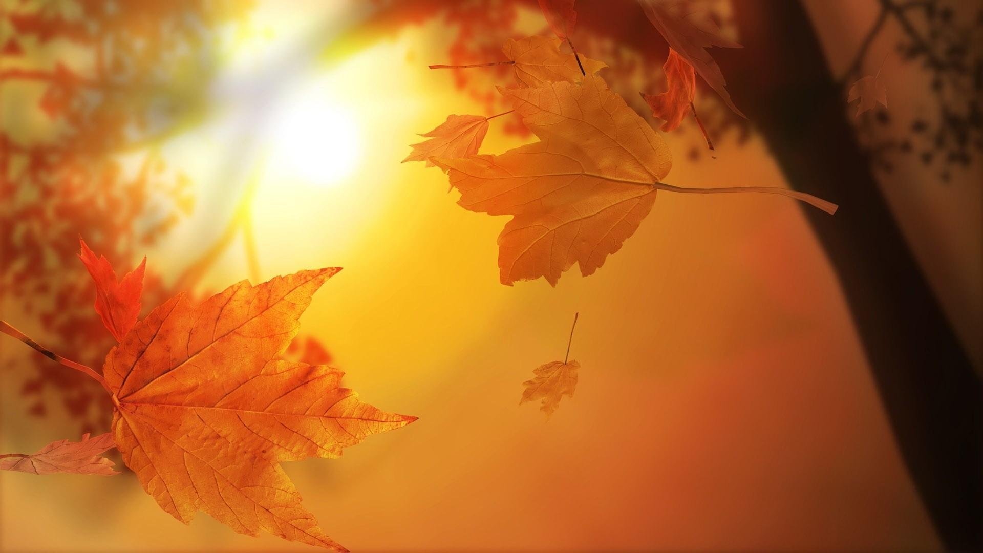 autumn wallpaper desktop hd