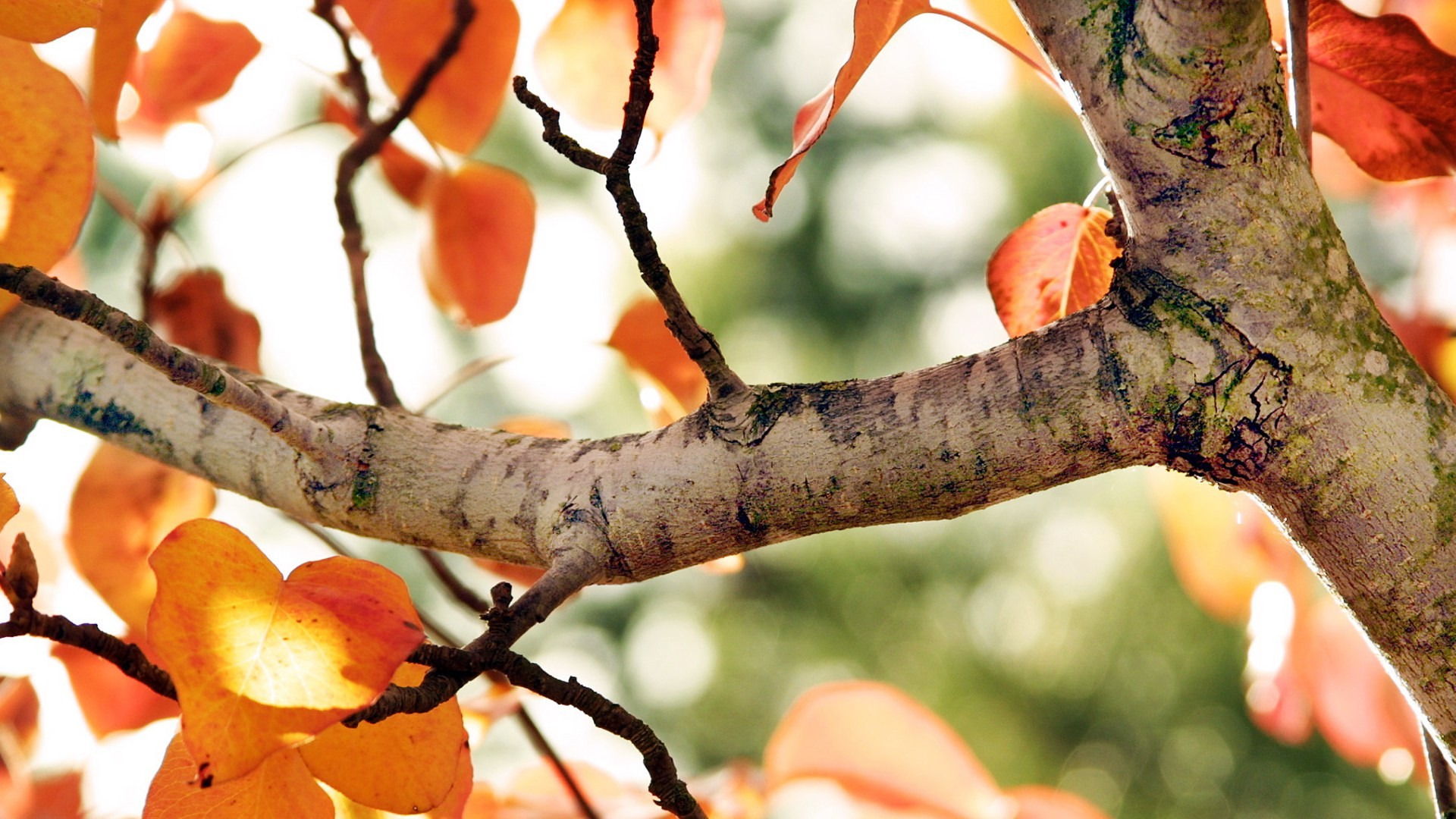 autumn desktop wallpaper tumblr