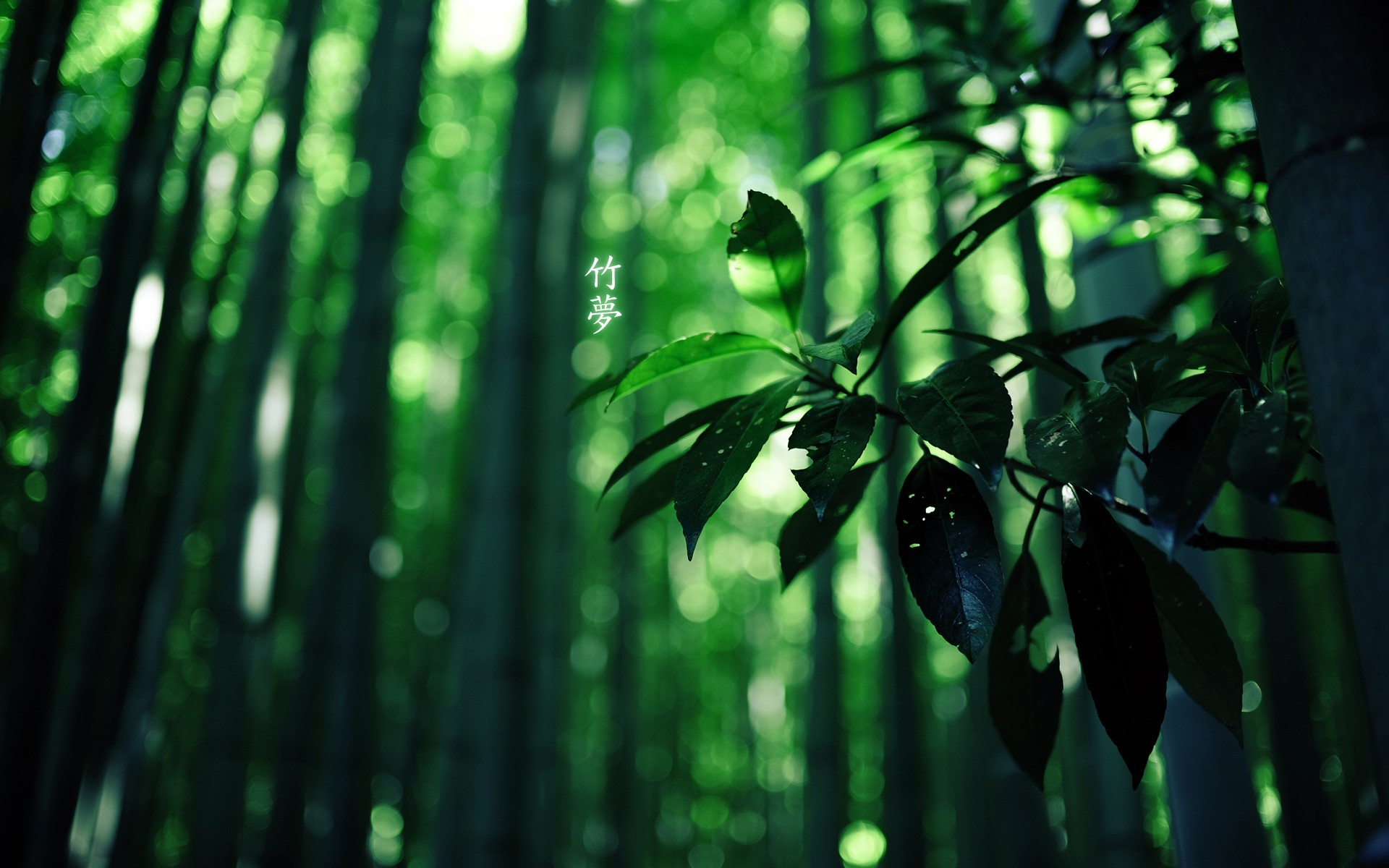 bamboos images