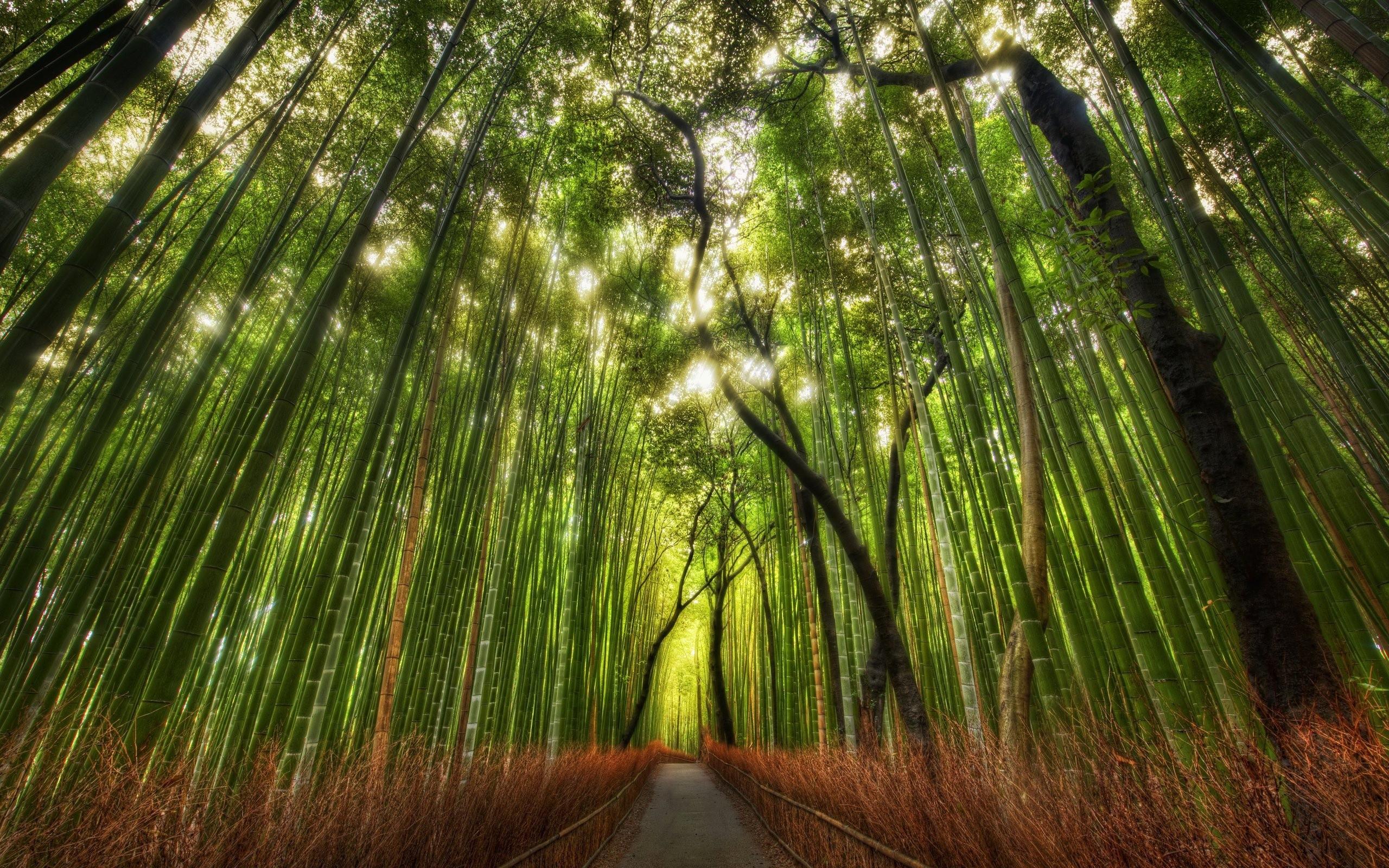 bamboo pic