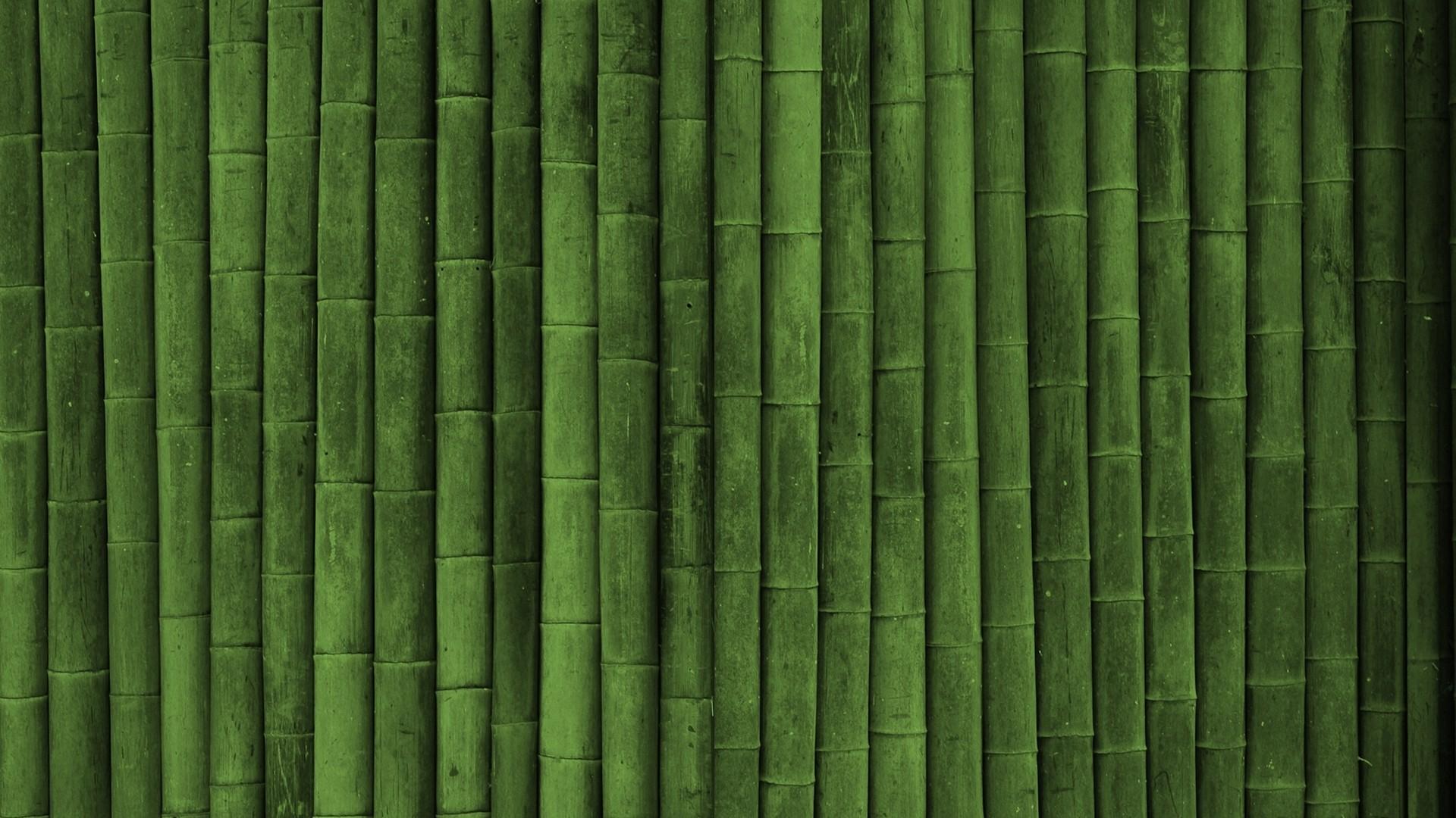 bamboo pics