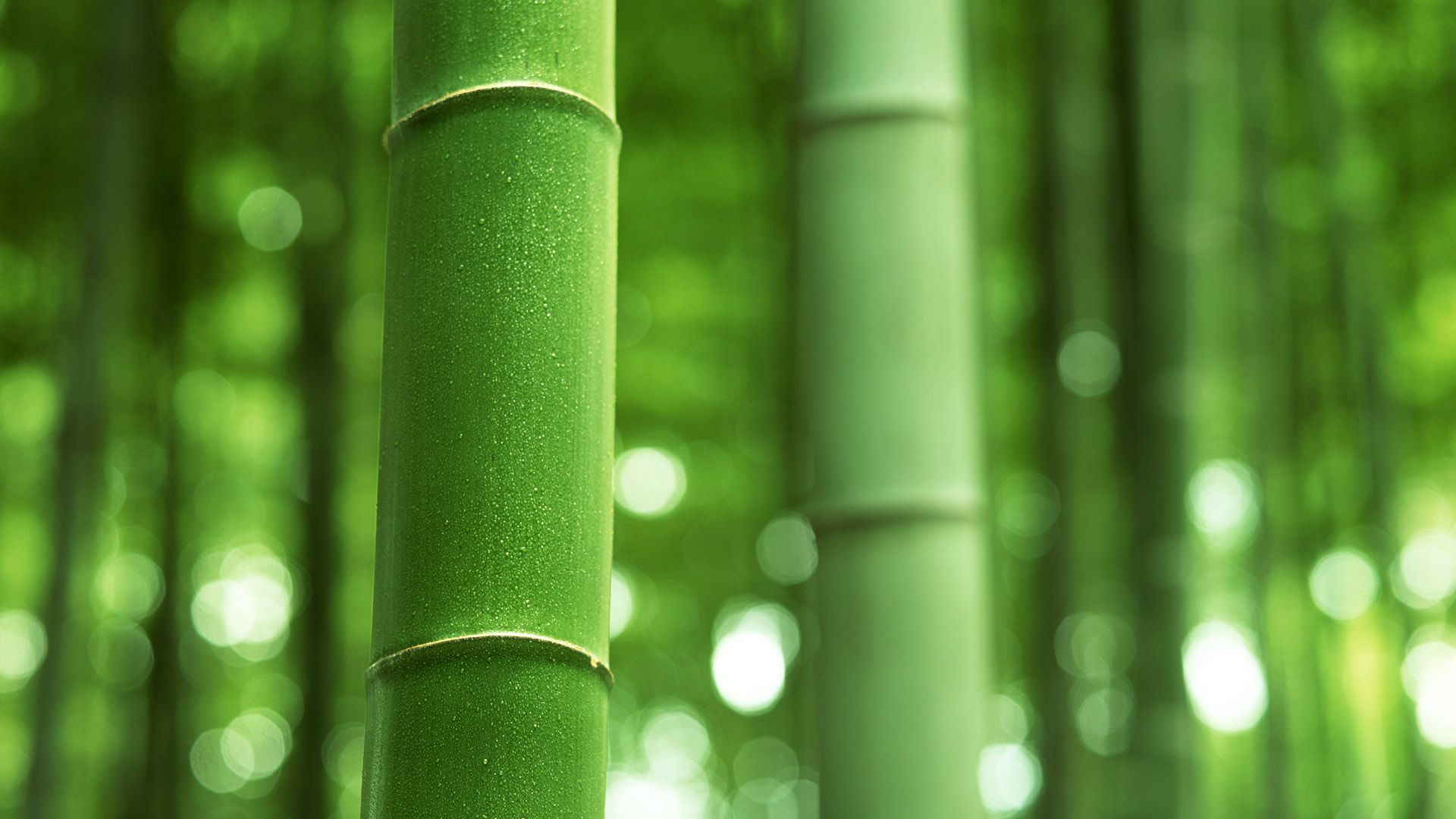 bamboo plant pic