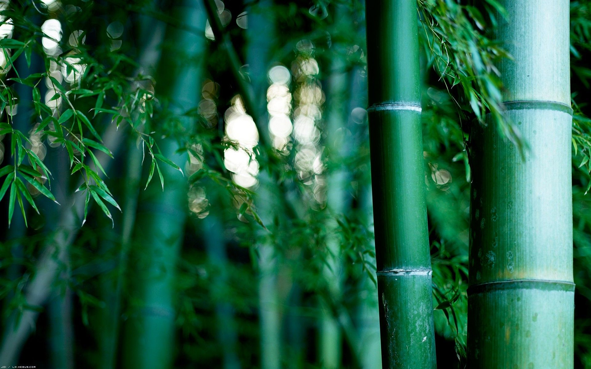 bamboo images free