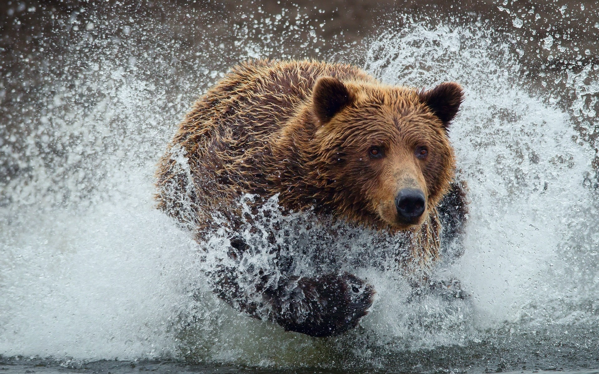 hd bear wallpaper, hug a bear day