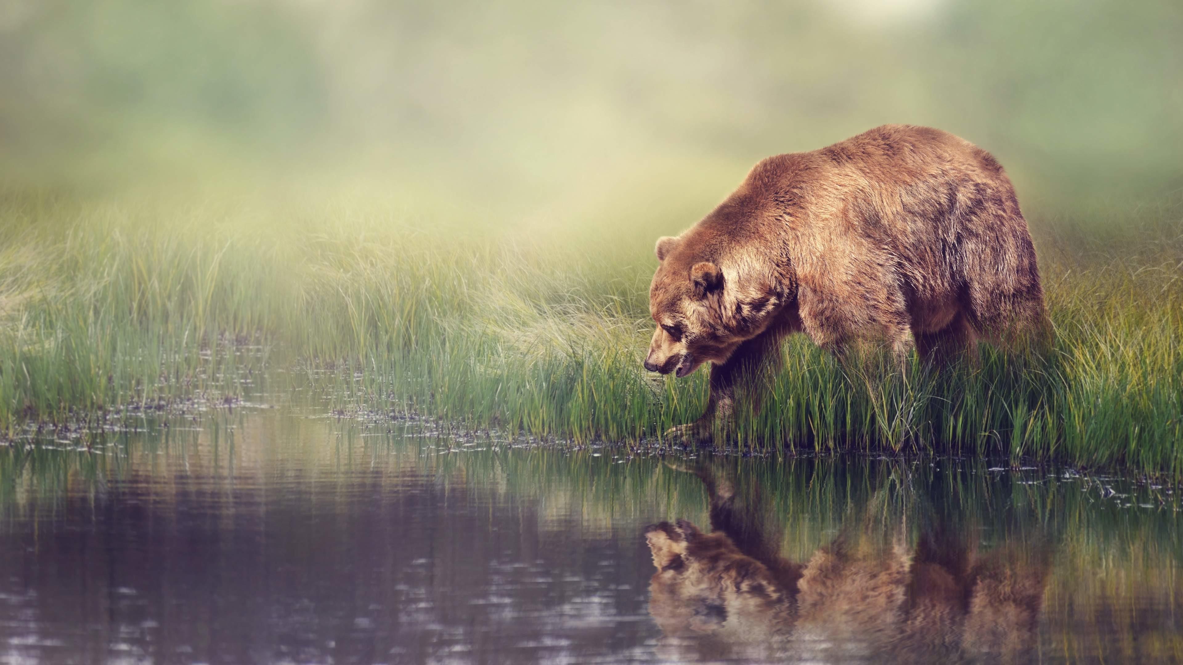 bear desktop backgrounds