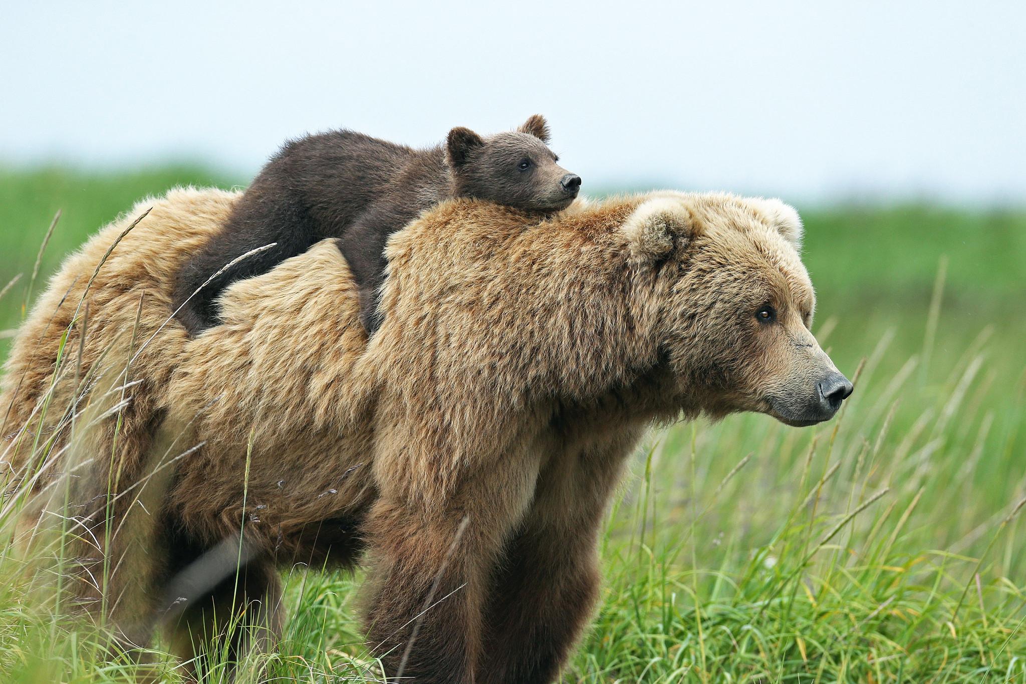 care bear wallpaper