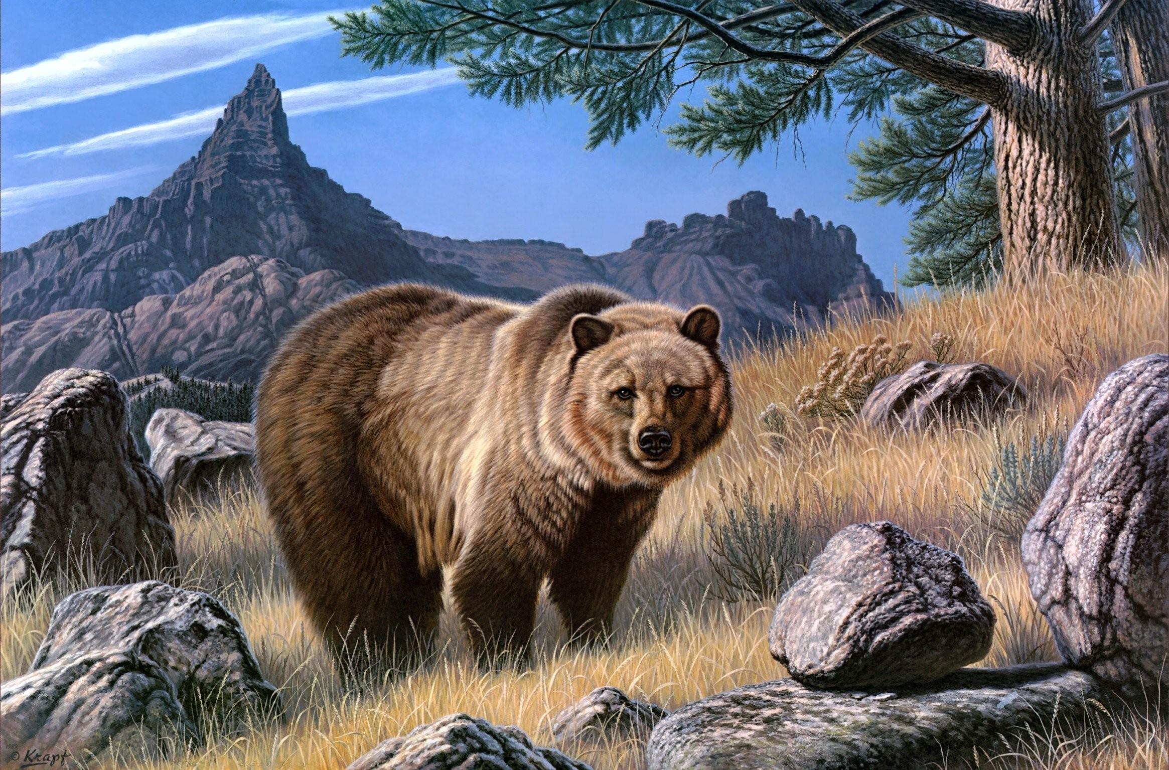 bear hd wallpaper