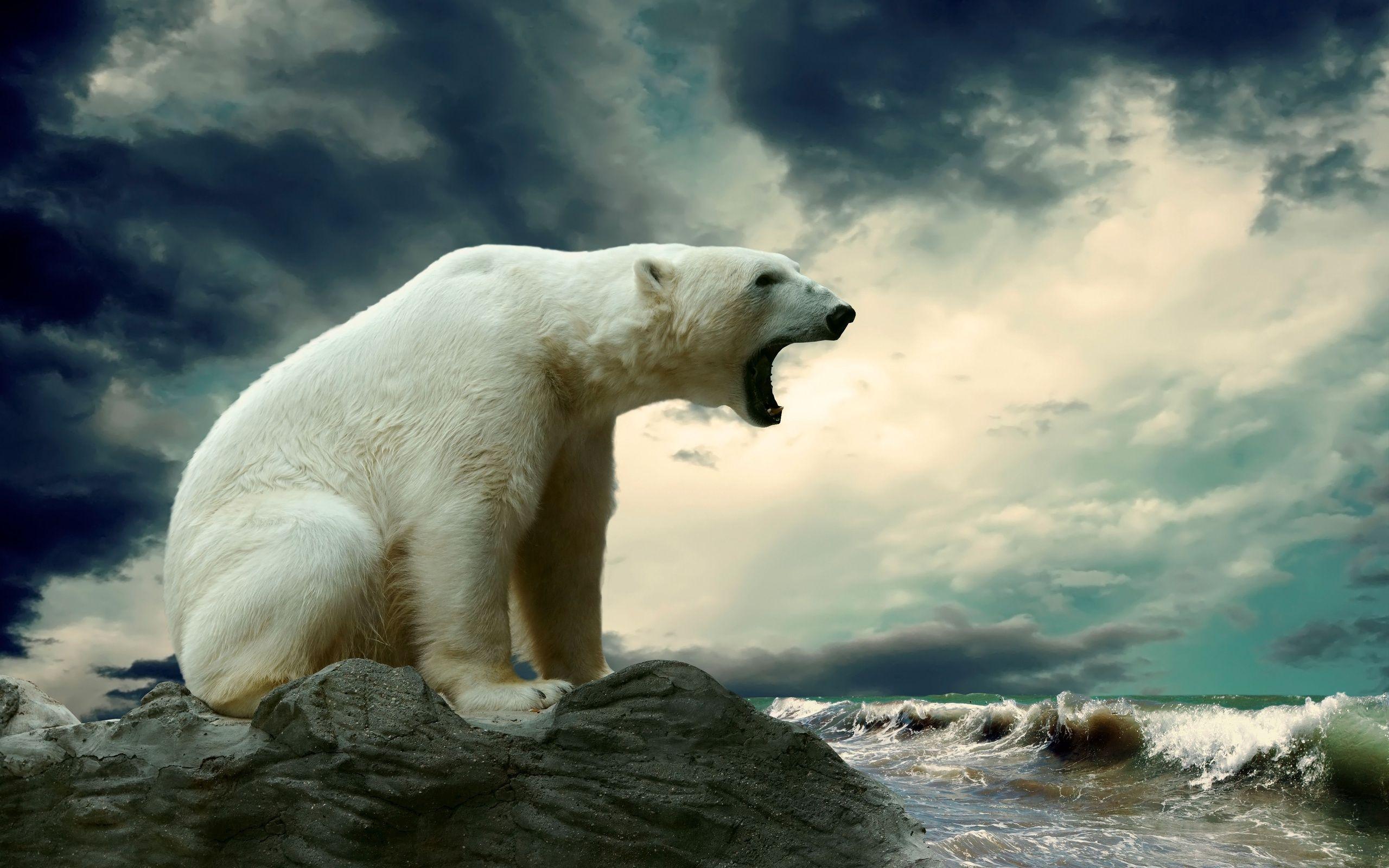 wallpaper bear