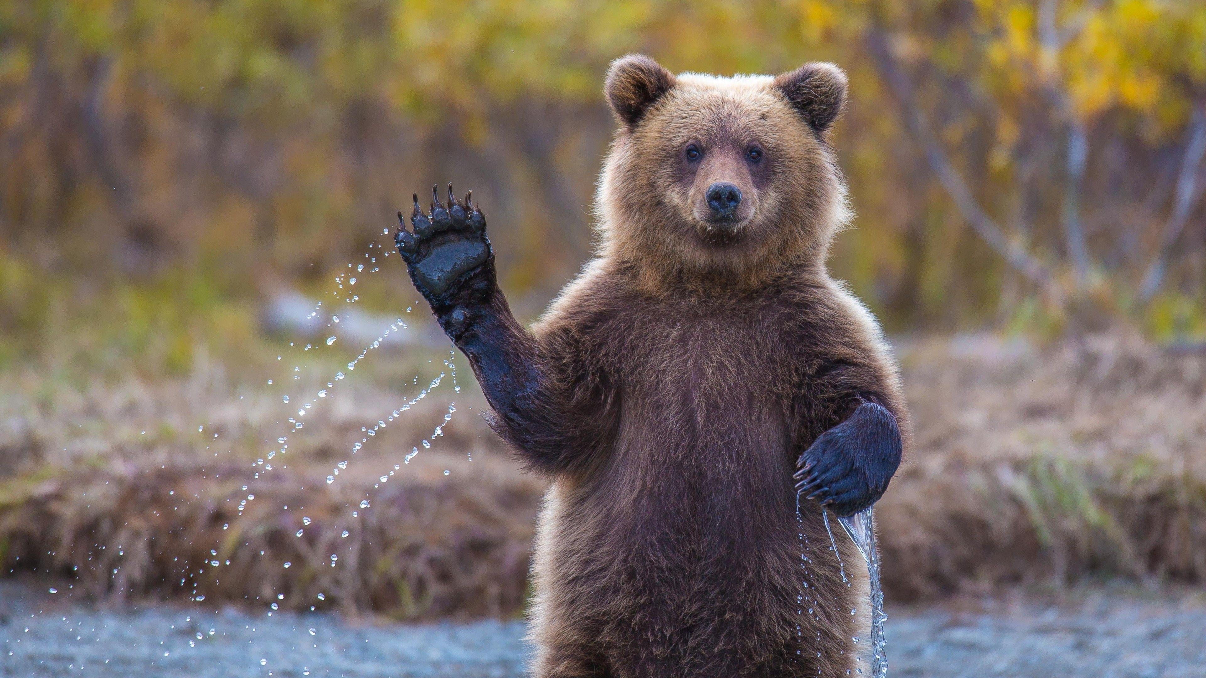 polar bear desktop background