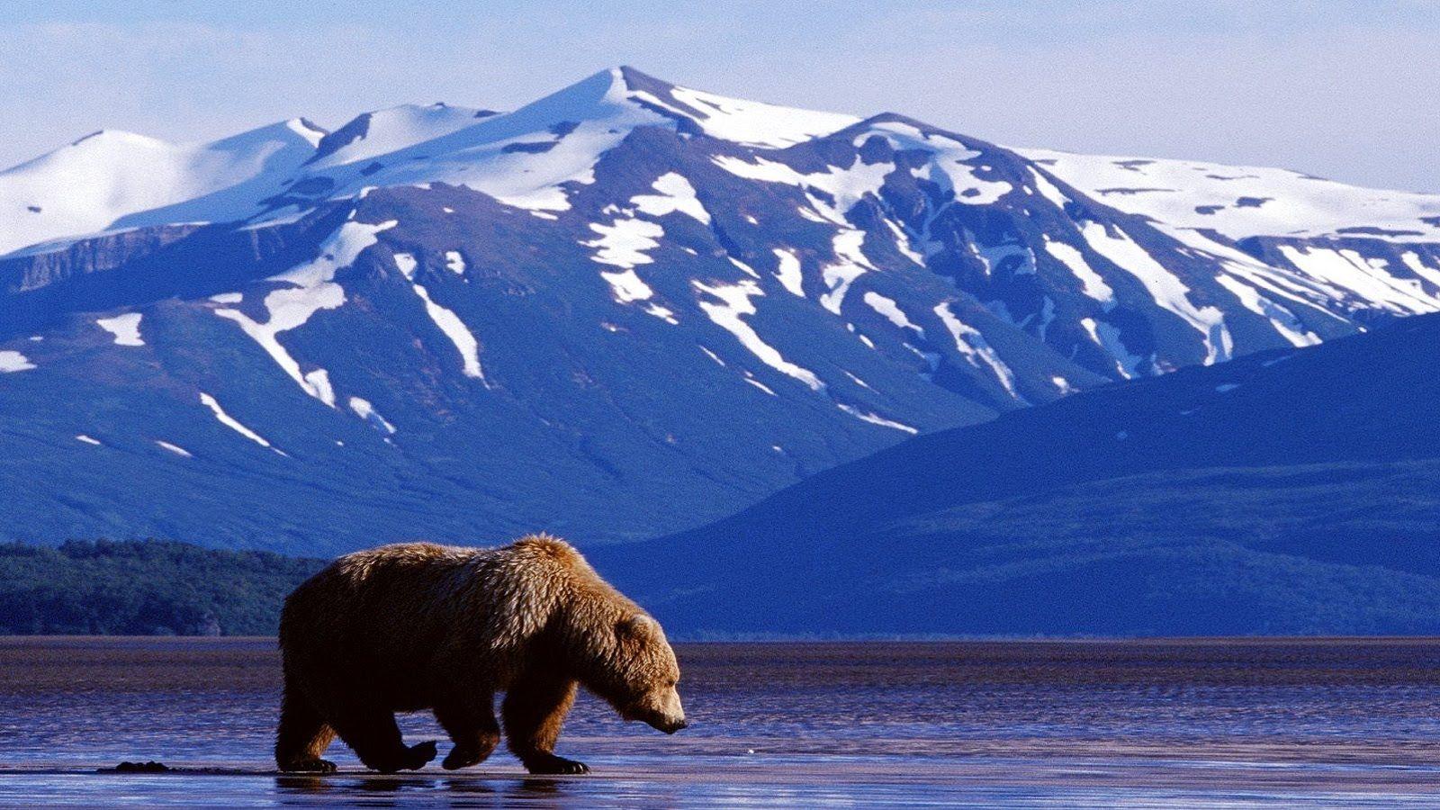 black bear images free
