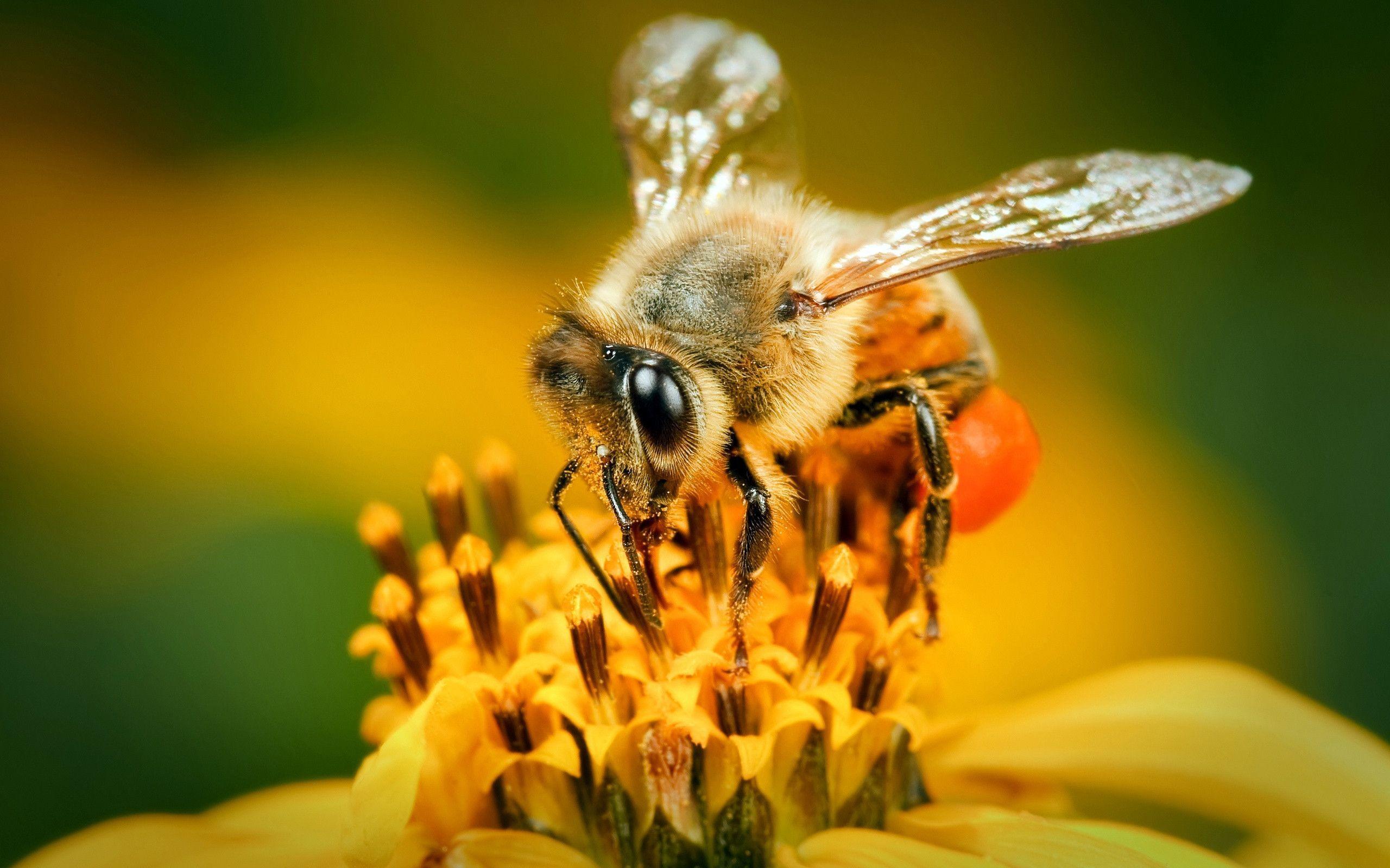 pics of bee