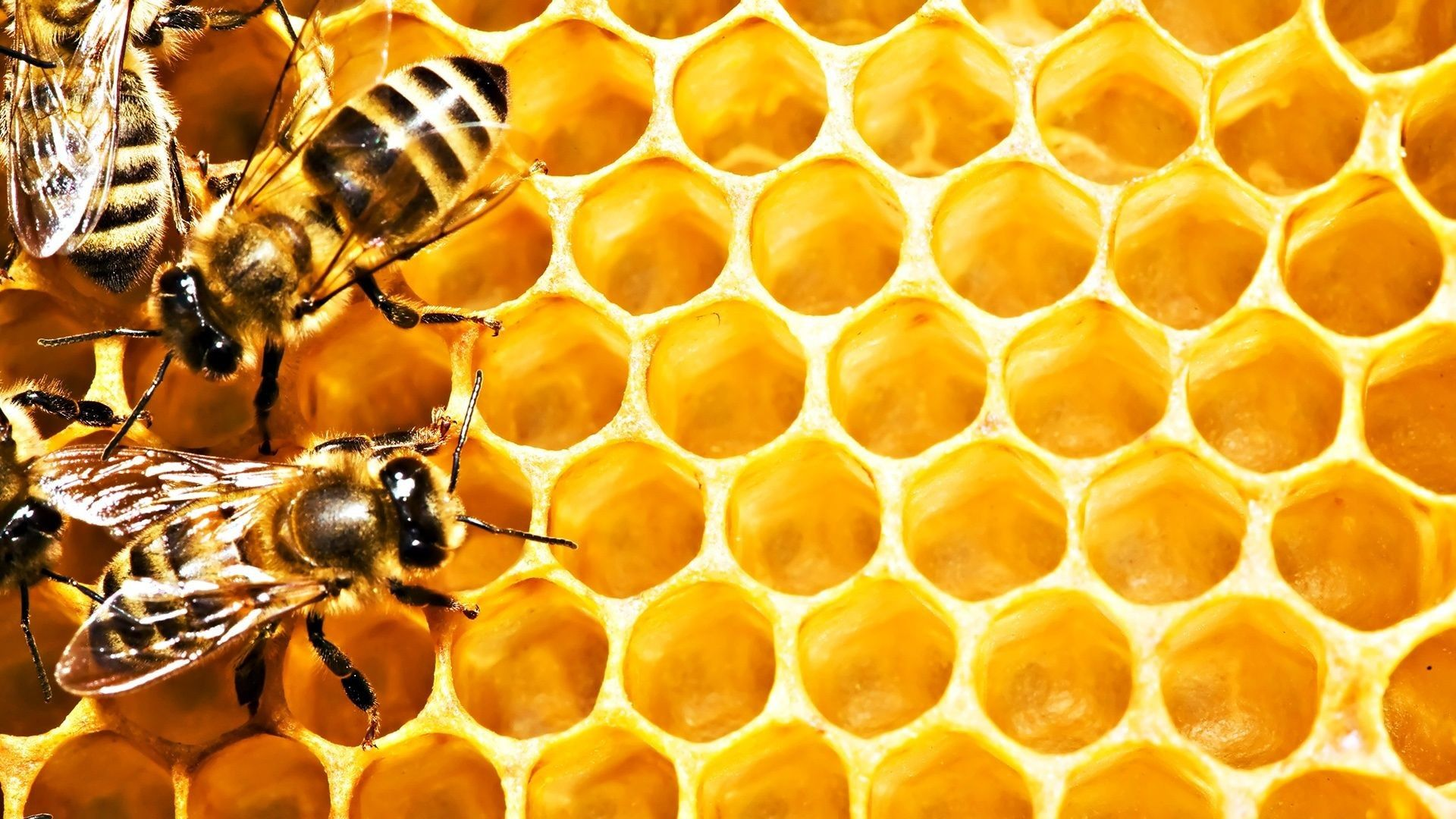 images of bees
