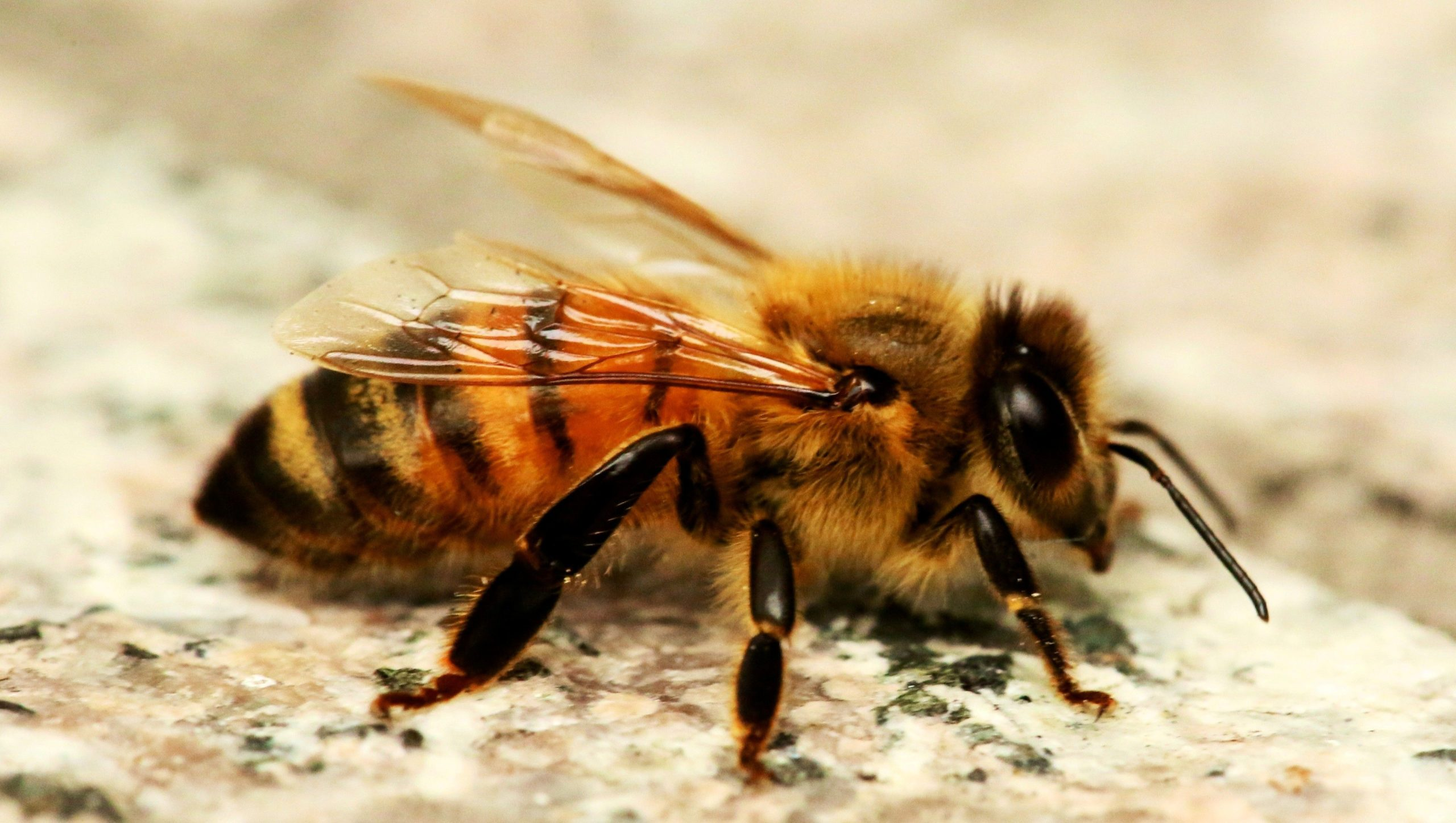 a picture of a bee