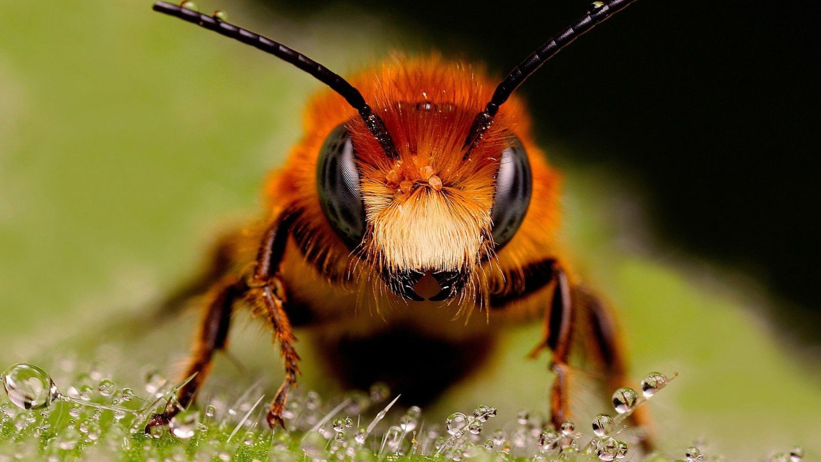 images of a bee