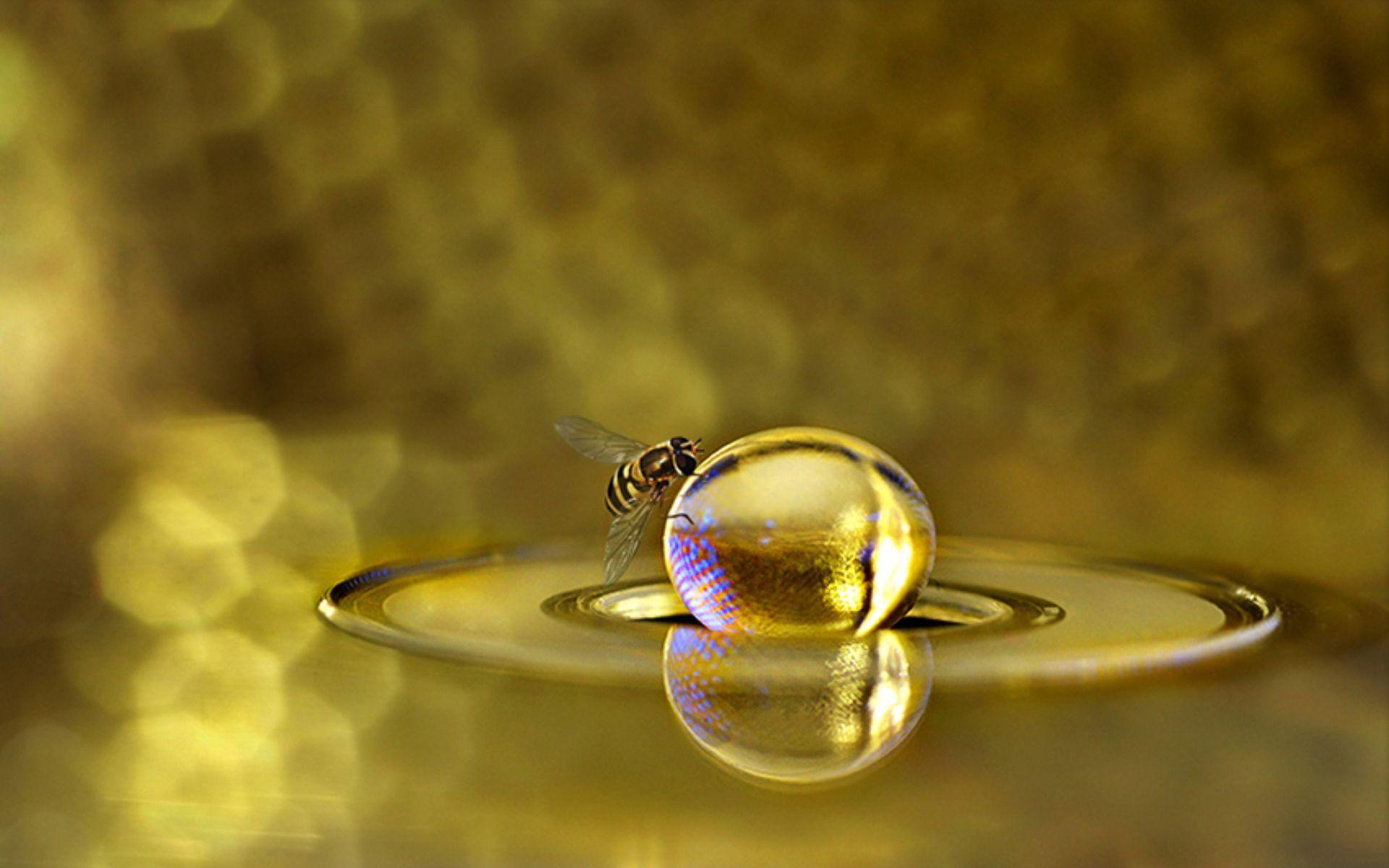 honey bee images