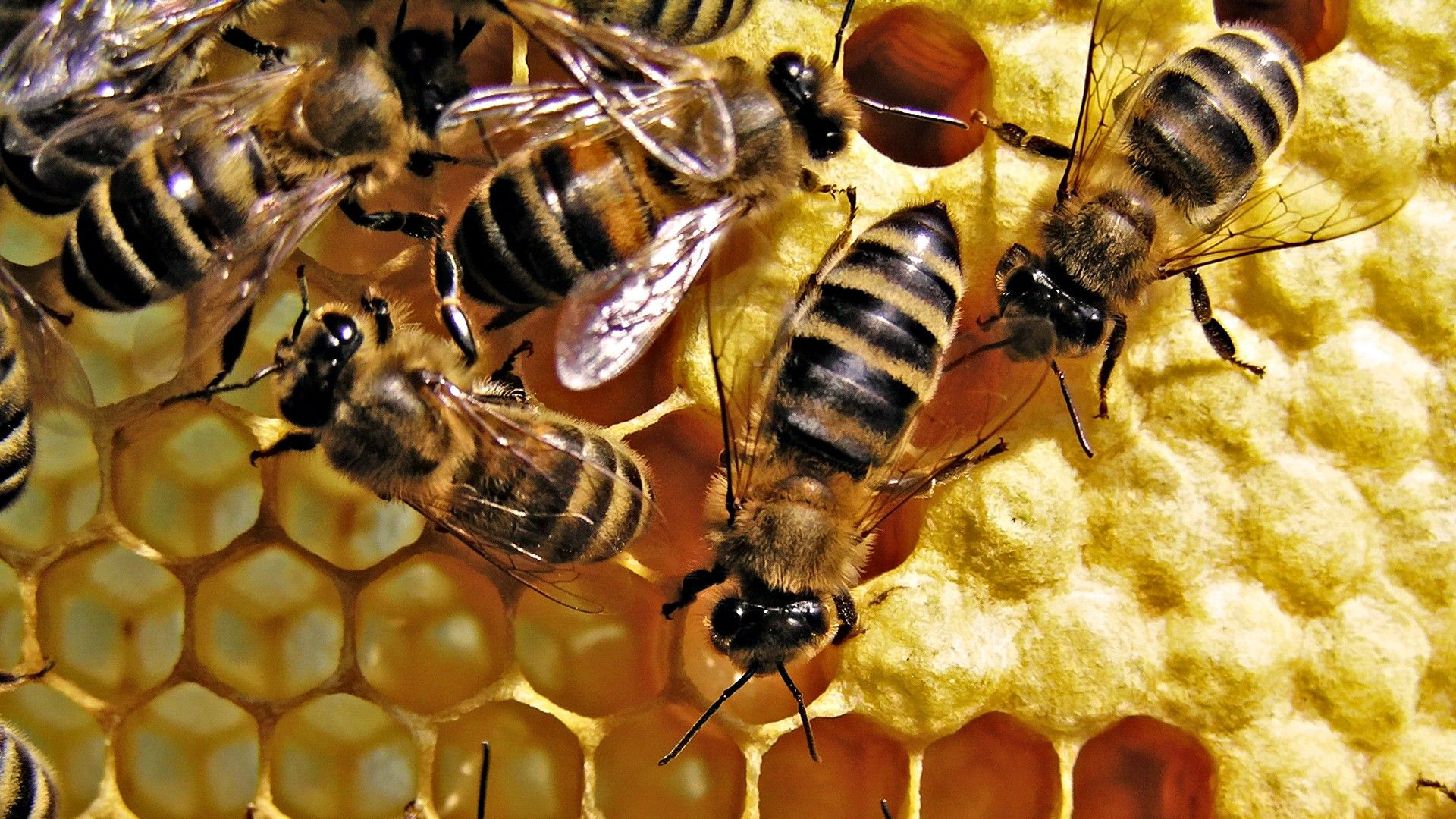 bees pics hd