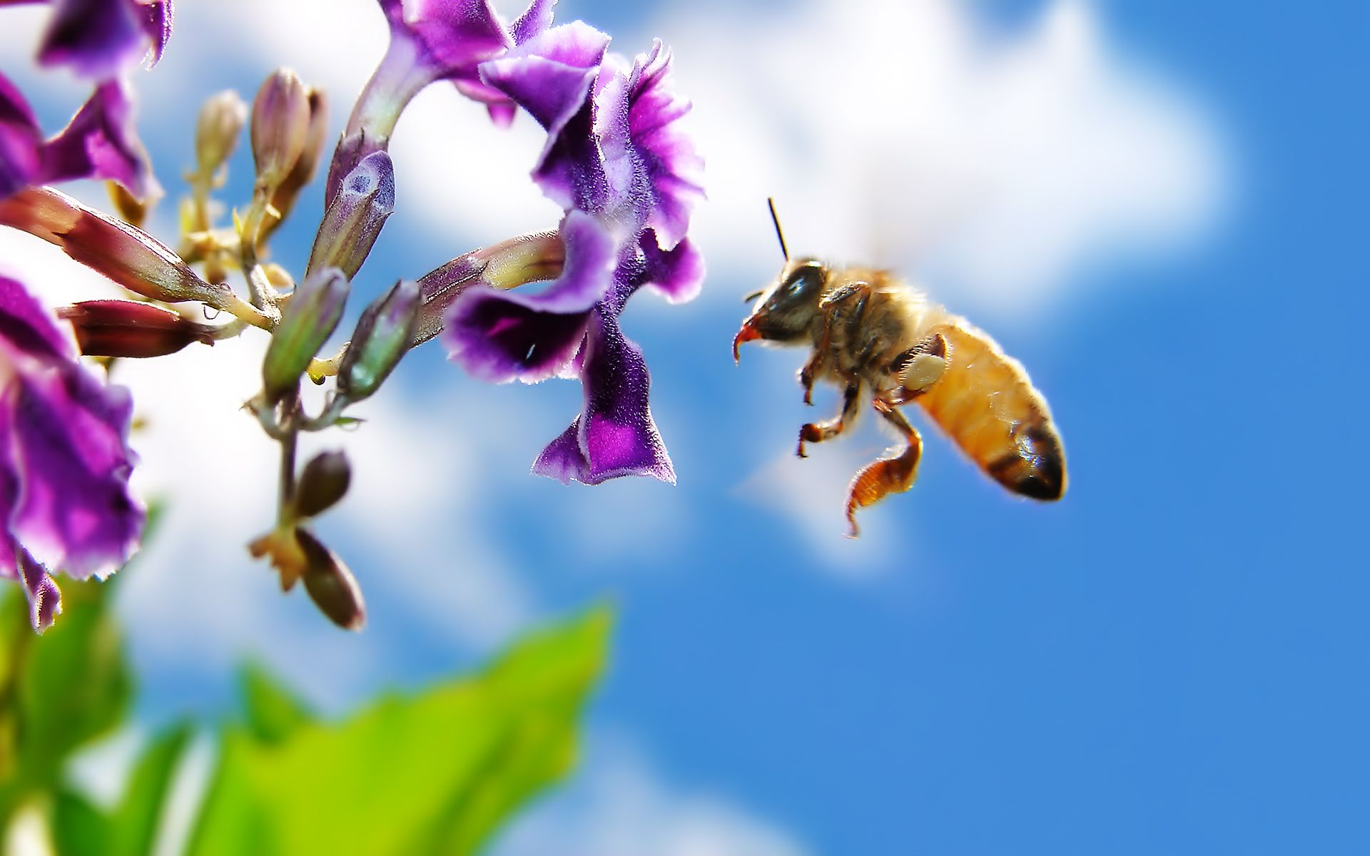 honey bee images hd free