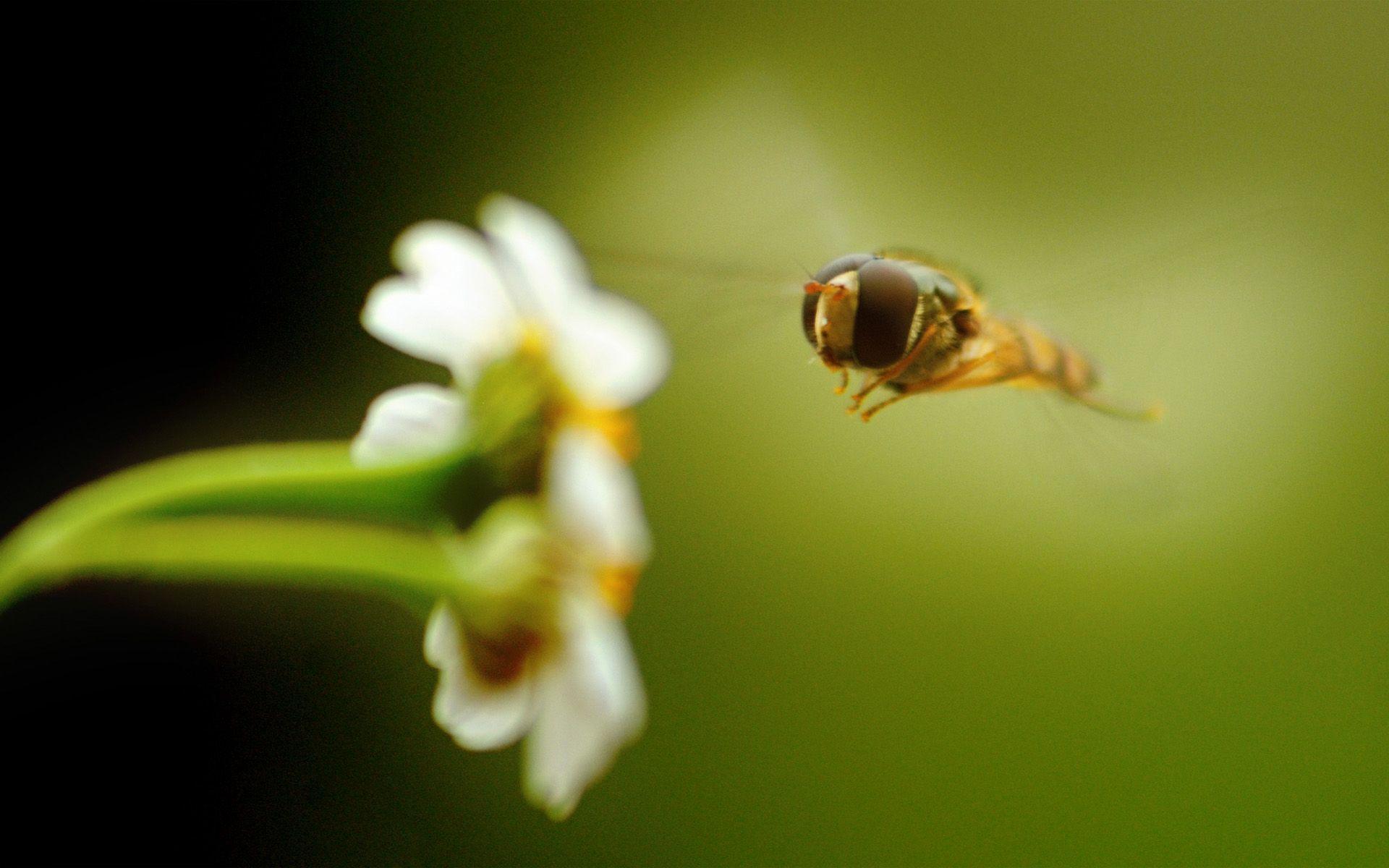 bee desktop wallpaper